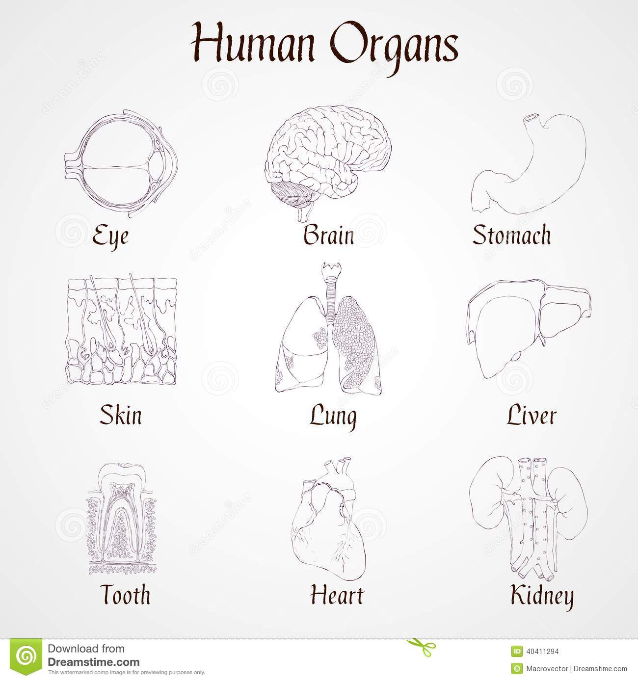 Human Organs Icons Stock Vector