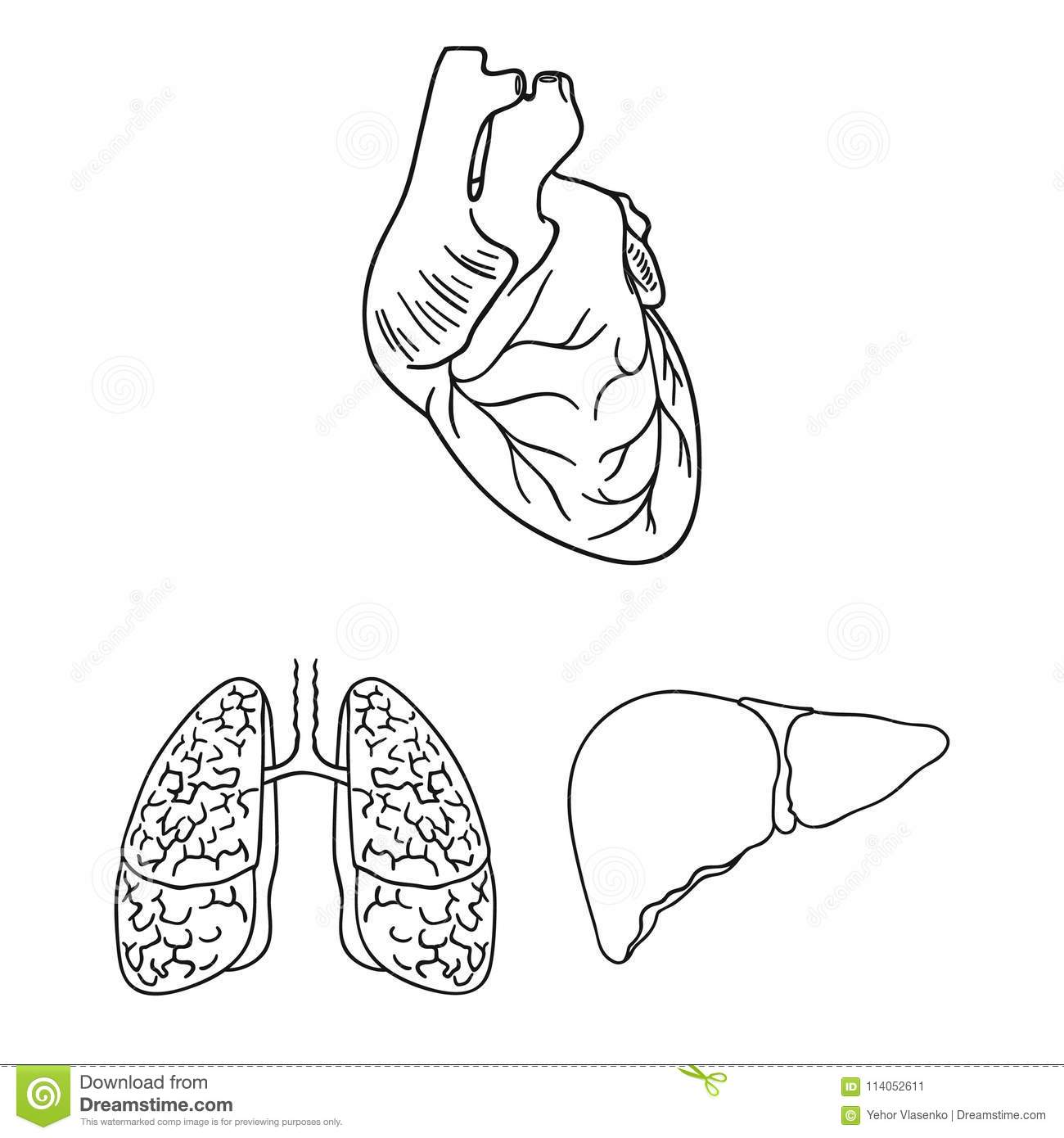 Human Organs Outline Icons In Set Collection For Design