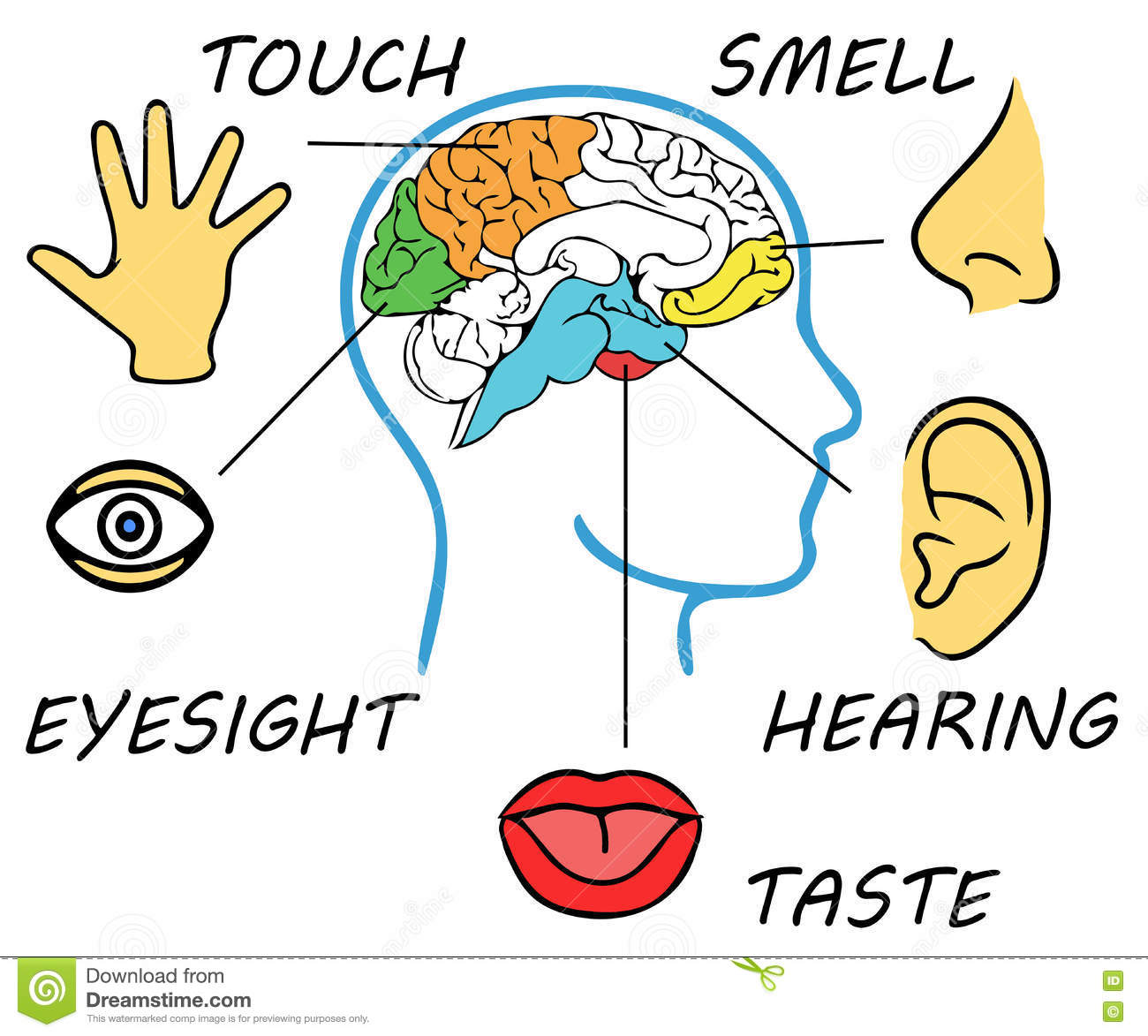 Children Illustrations Clipart Five Senses Smell Hearing