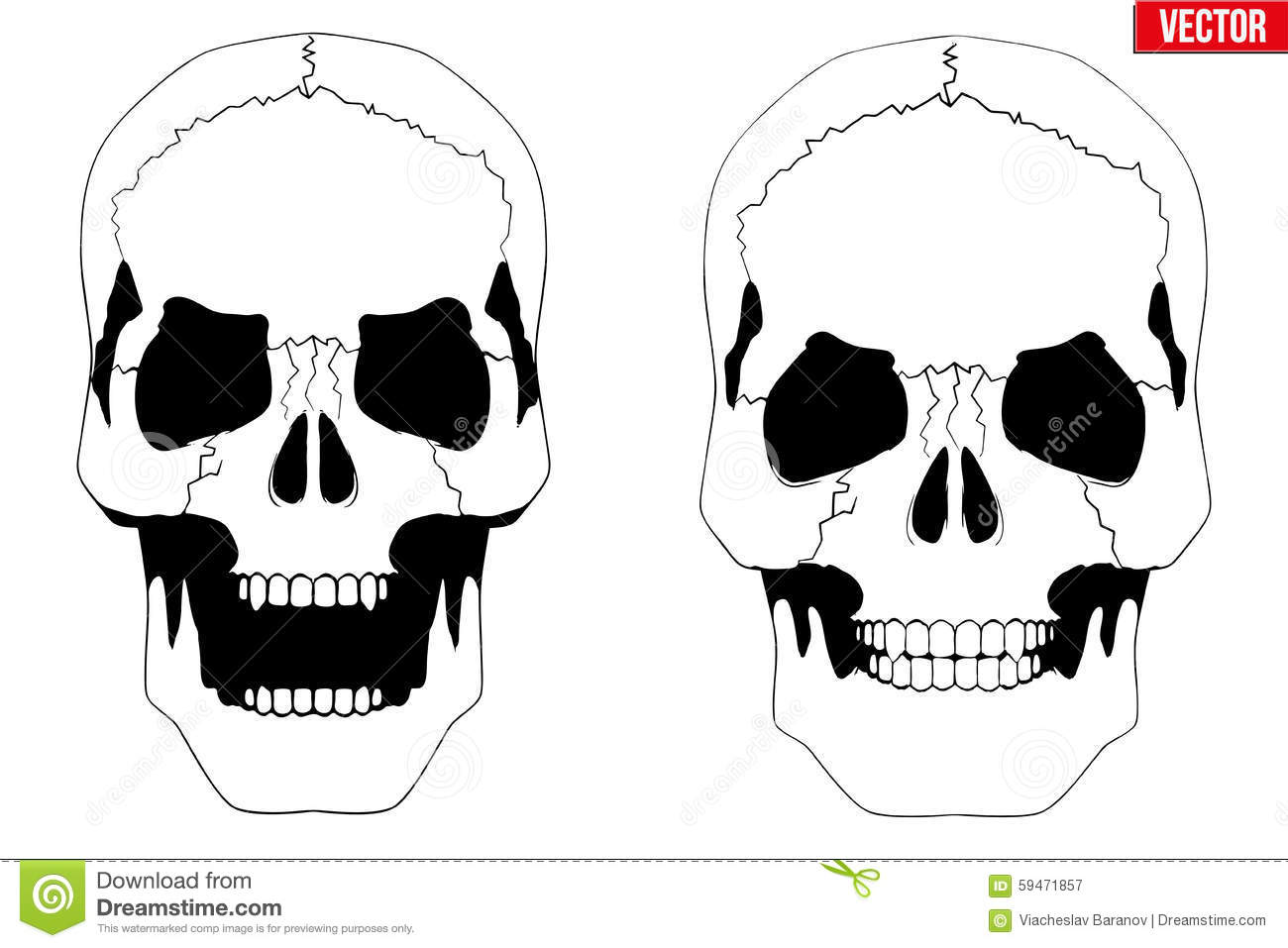 Human Skull With Open Mouth In Sketch Style Stock Vector