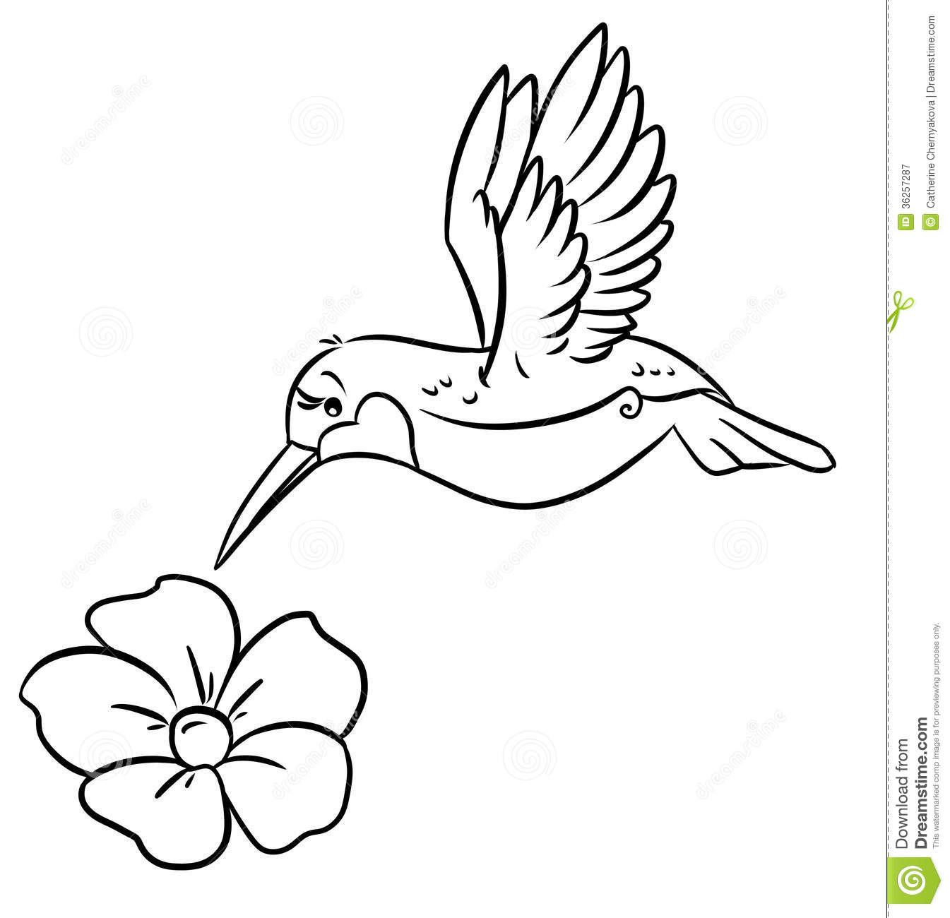 Hummingbird And Flower Coloring Pages Royalty Free Stock Photography