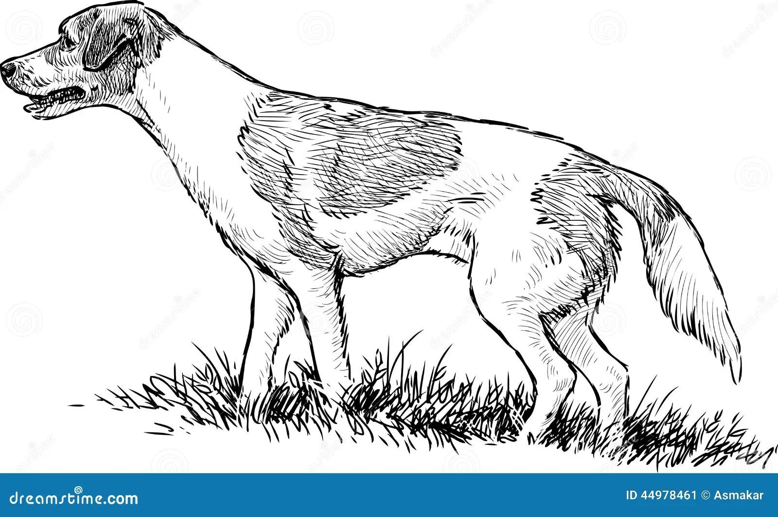 Hunting Dog Stock Vector Illustration Of Hunter Drawn