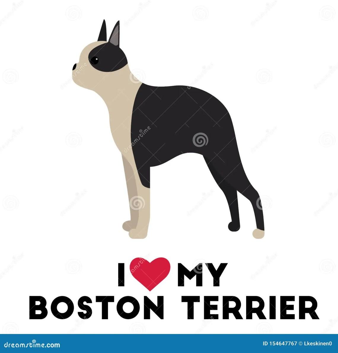 Download I love my boston terrier stock vector. Illustration of ...