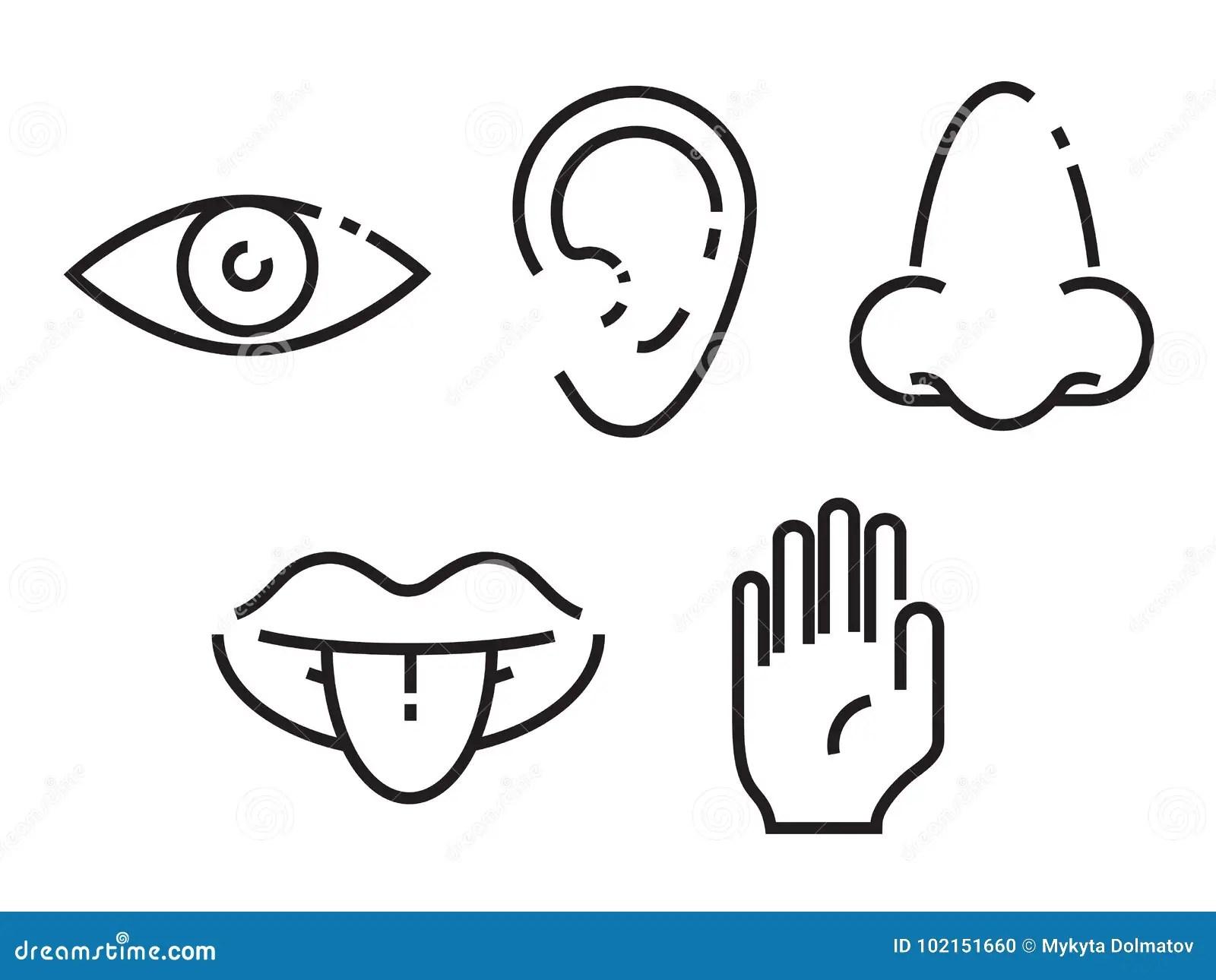Icon Set Of The Five Human Senses Simple Minimal Line Icons Illustration Stock Illustration