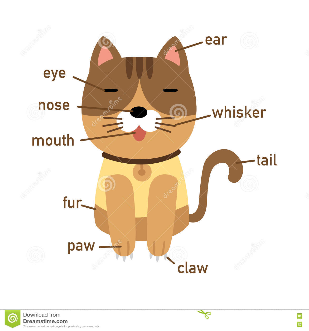 Illustration Of Cat Vocabulary Part Of Body Stock Vector