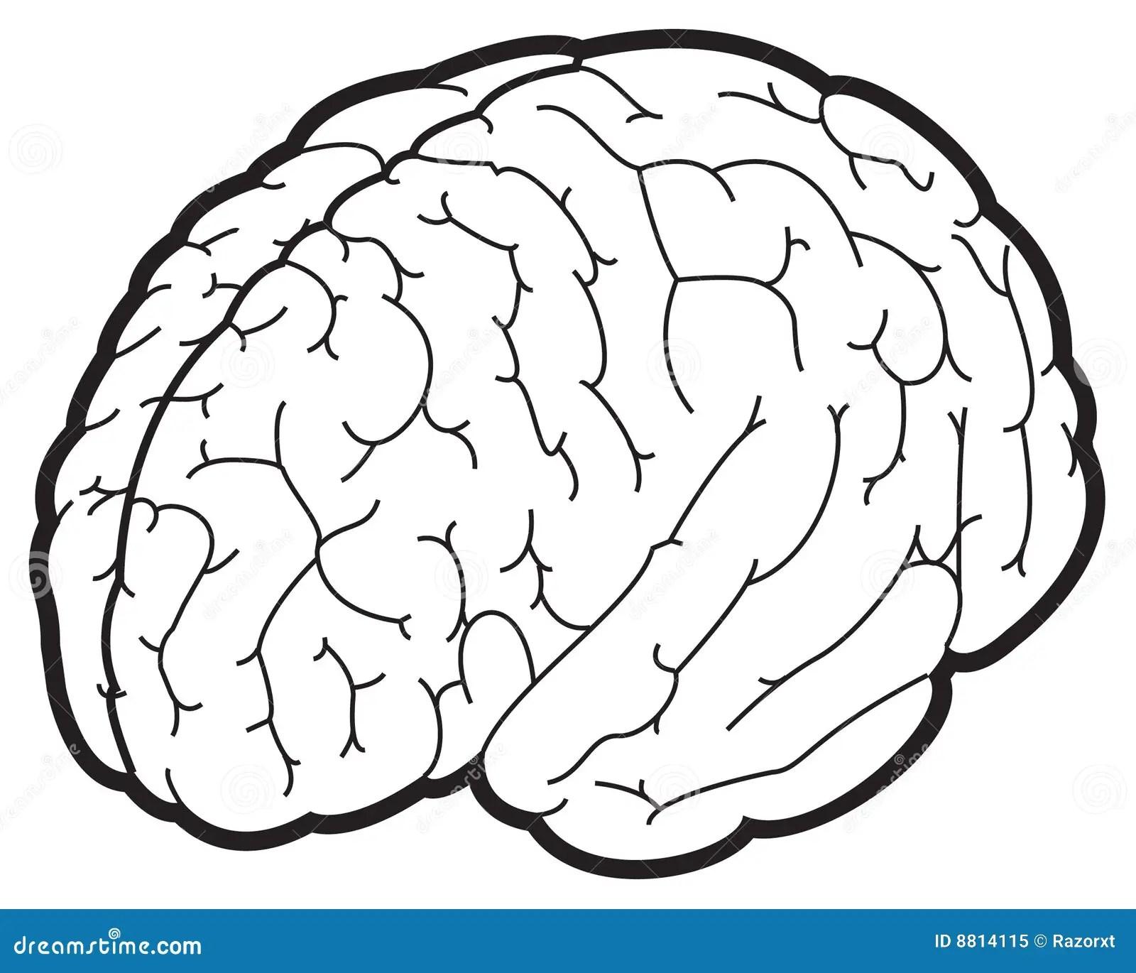 Illustration D Un Cerveau Illustration De Vecteur