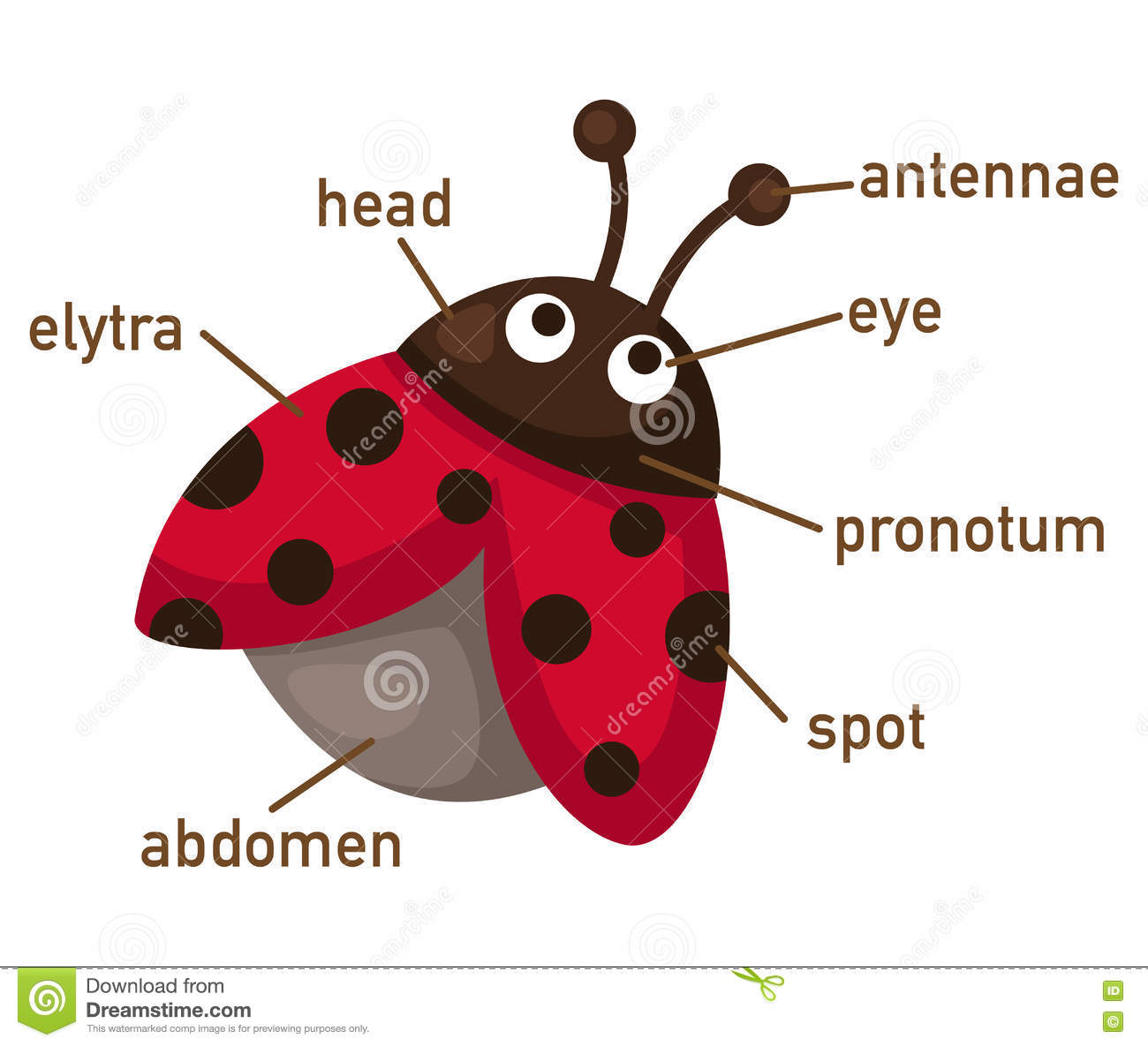 Illustration De Piece De Vocabulaire De Coccinelle De
