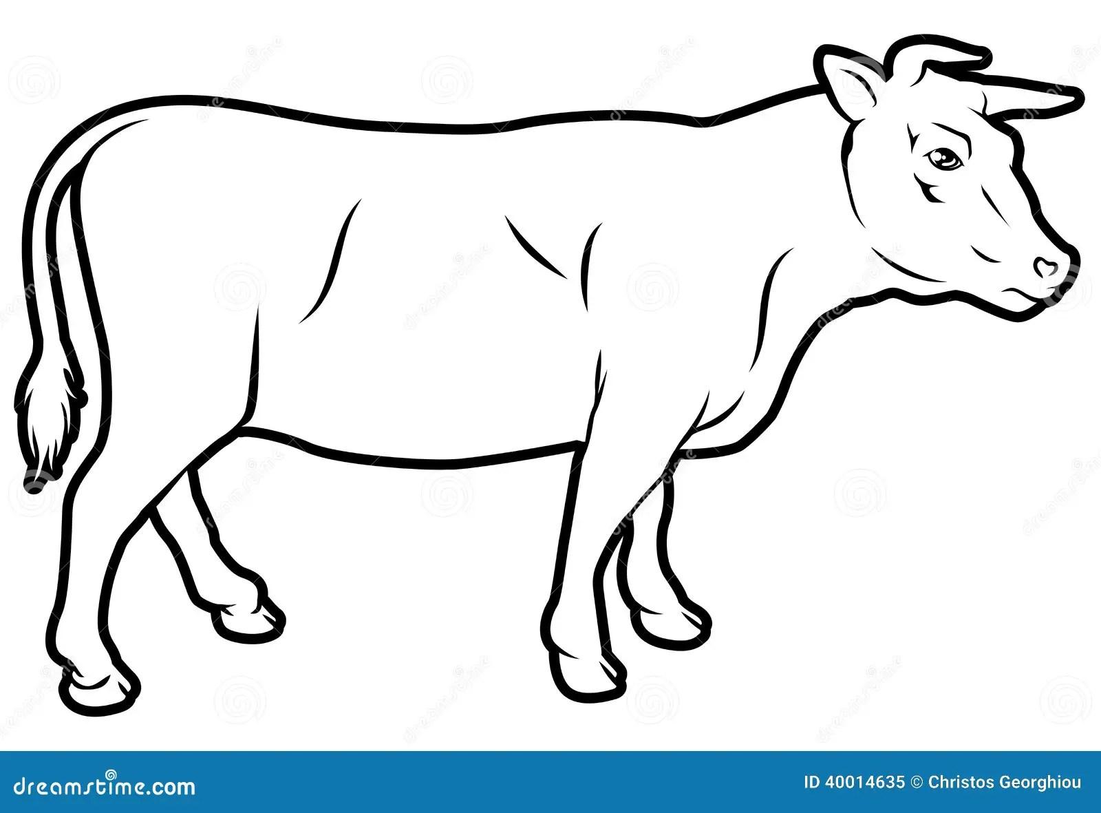 Illustration De Vache De Boucherie Illustration De Vecteur