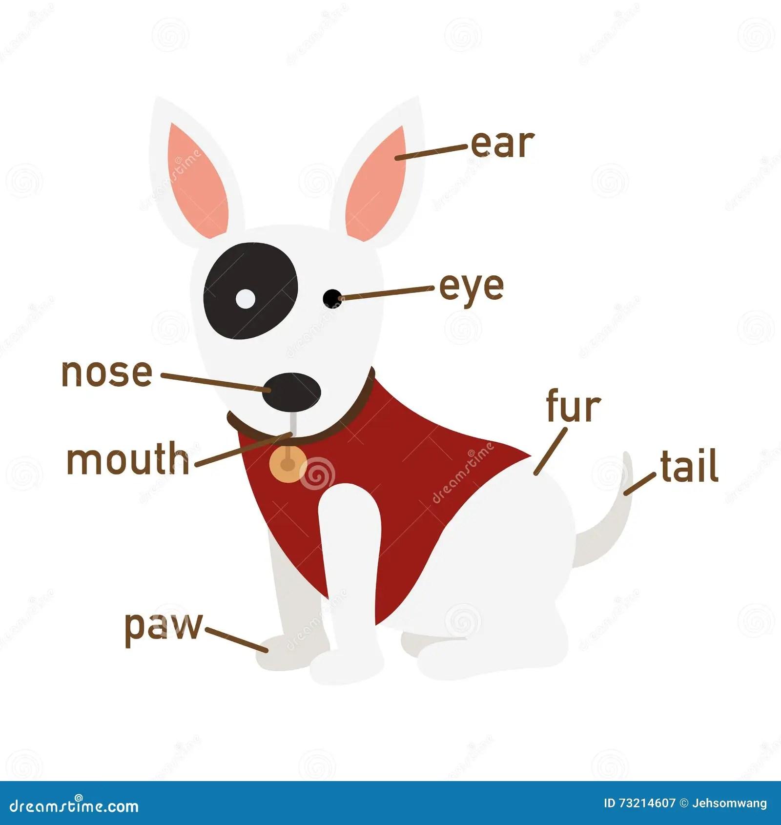 Illustration Of Dog Vocabulary Part Of Body Cartoon Vector