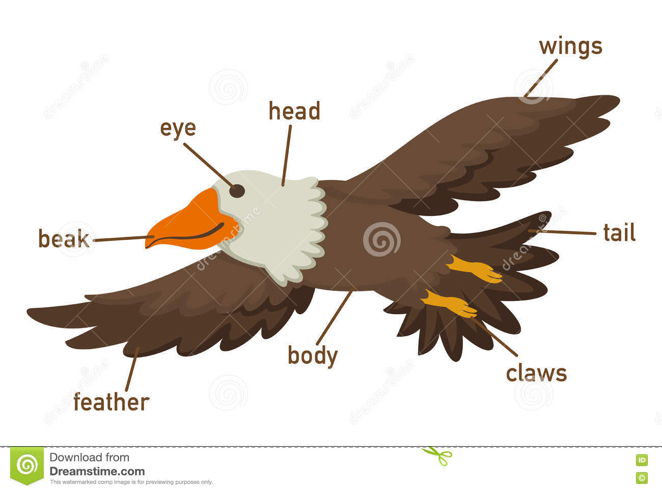 Illustration Of Eagles Vocabulary Part Of Body Stock