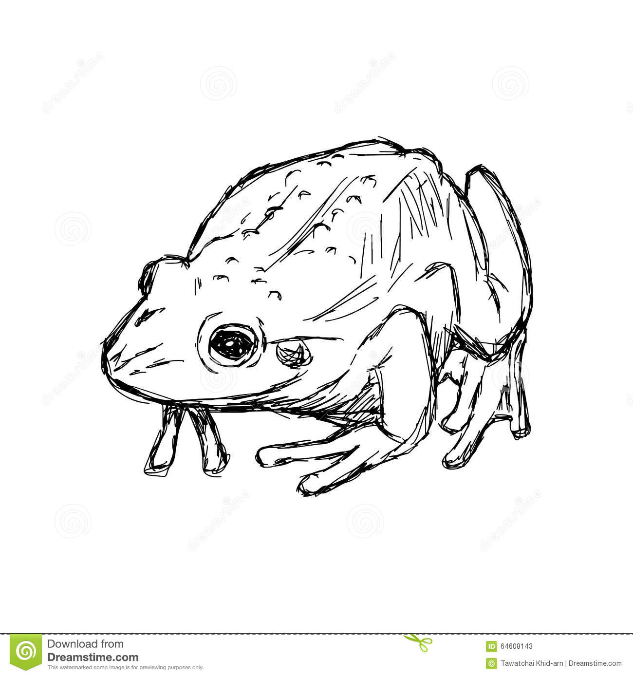 Illustration Hand Drawn Doodle Toad On White Stock