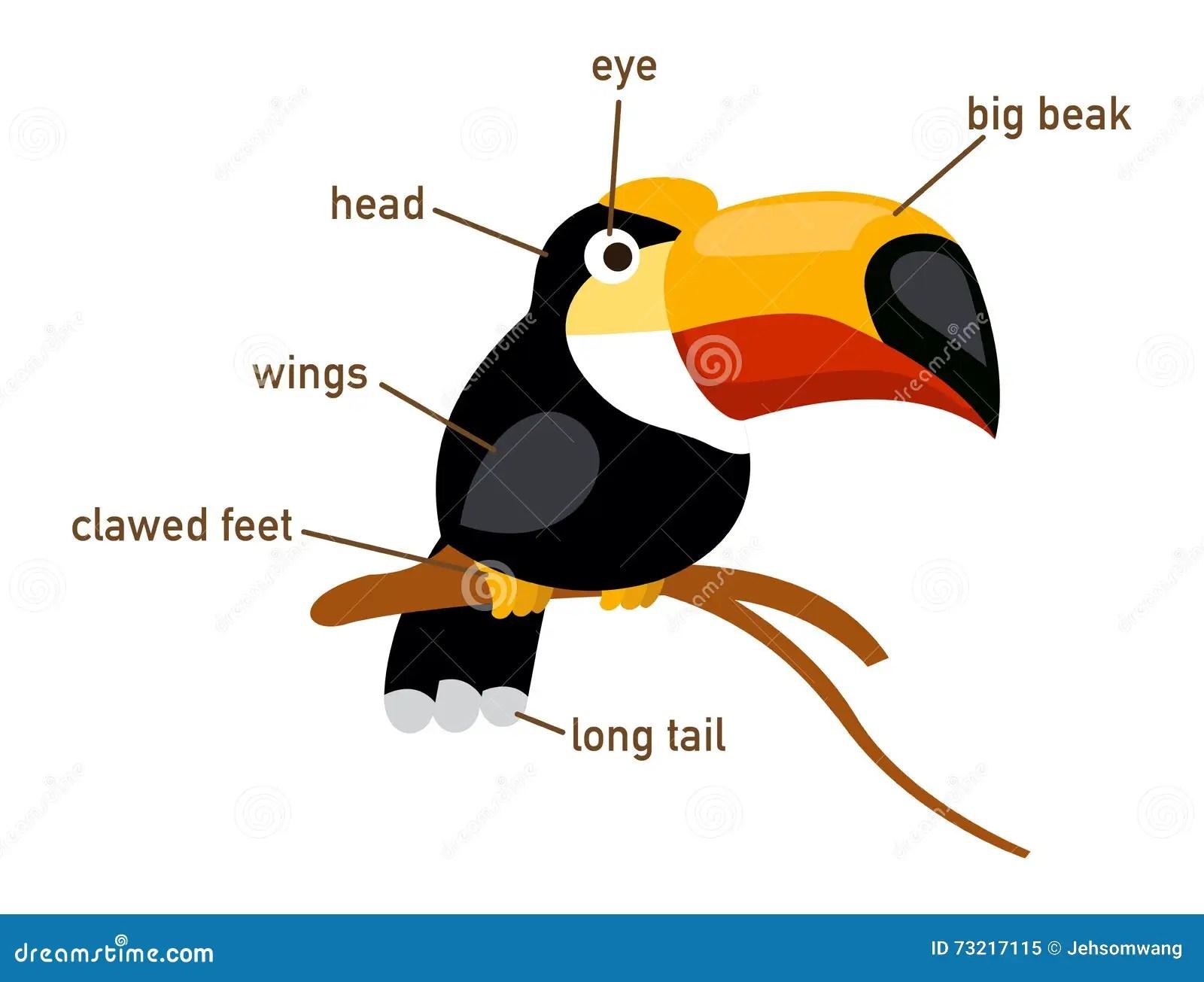Illustration Of Hornbill Vocabulary Part Of Body Stock