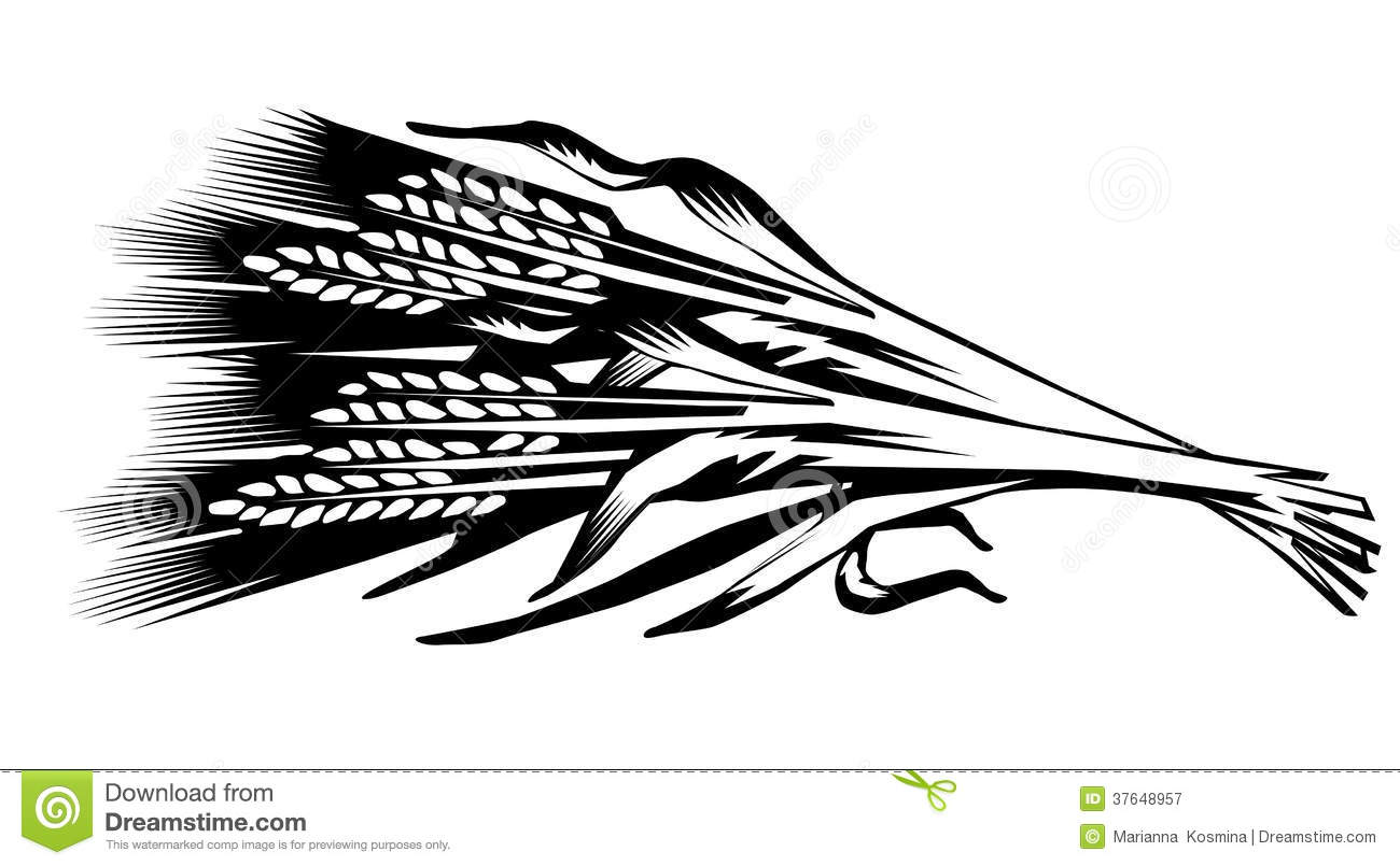 Illustration Of A Sheaf Of Cones Of Wheat Royalty Free