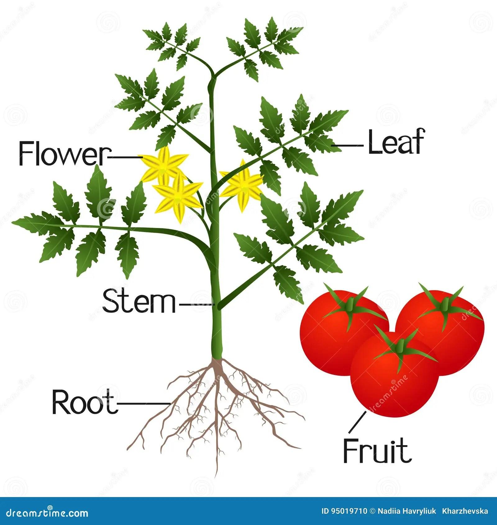 Worksheet Label Parts Of A Pepper Plant