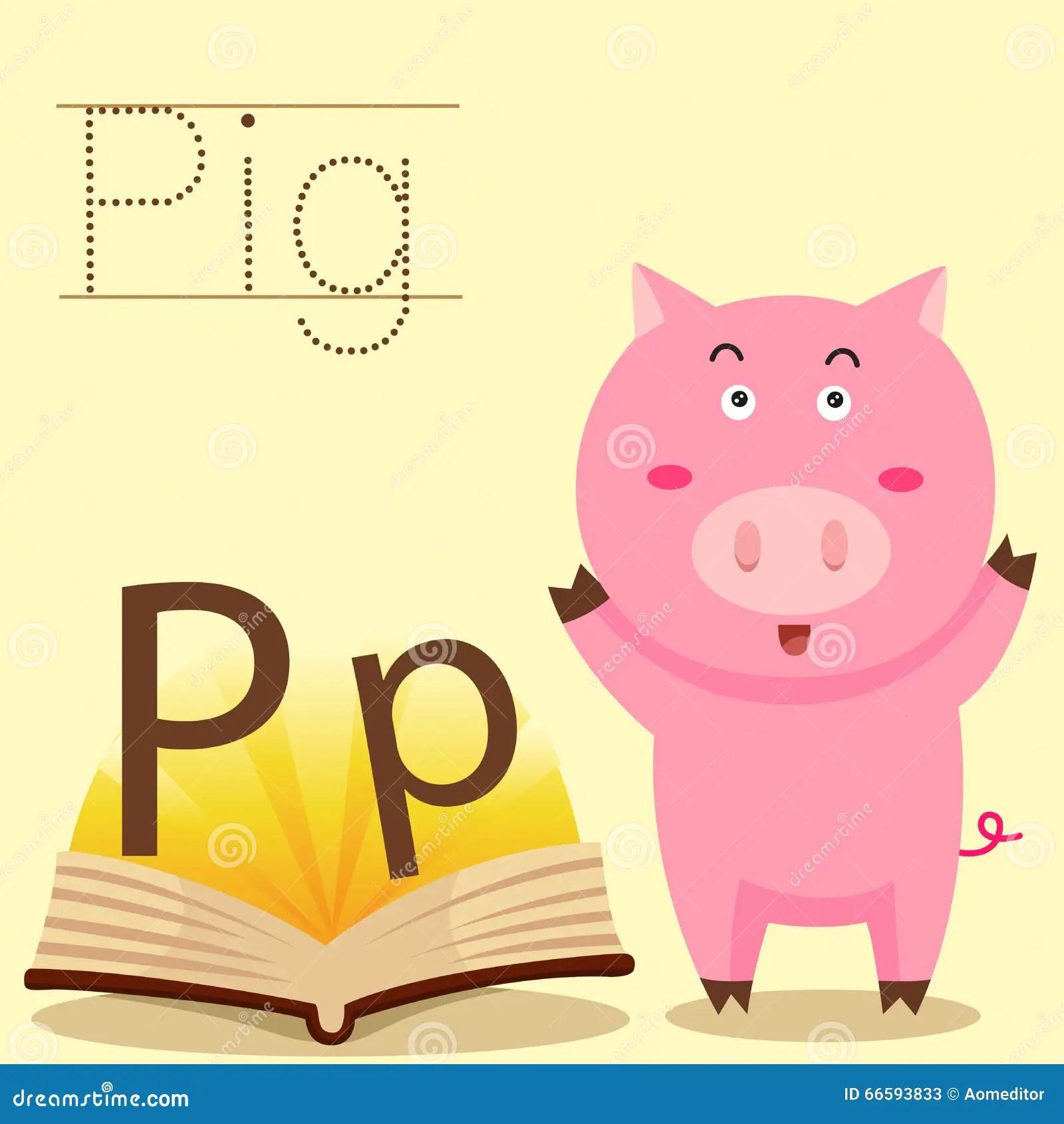 Illustrator Of P For Pig Vocabulary Stock Illustration