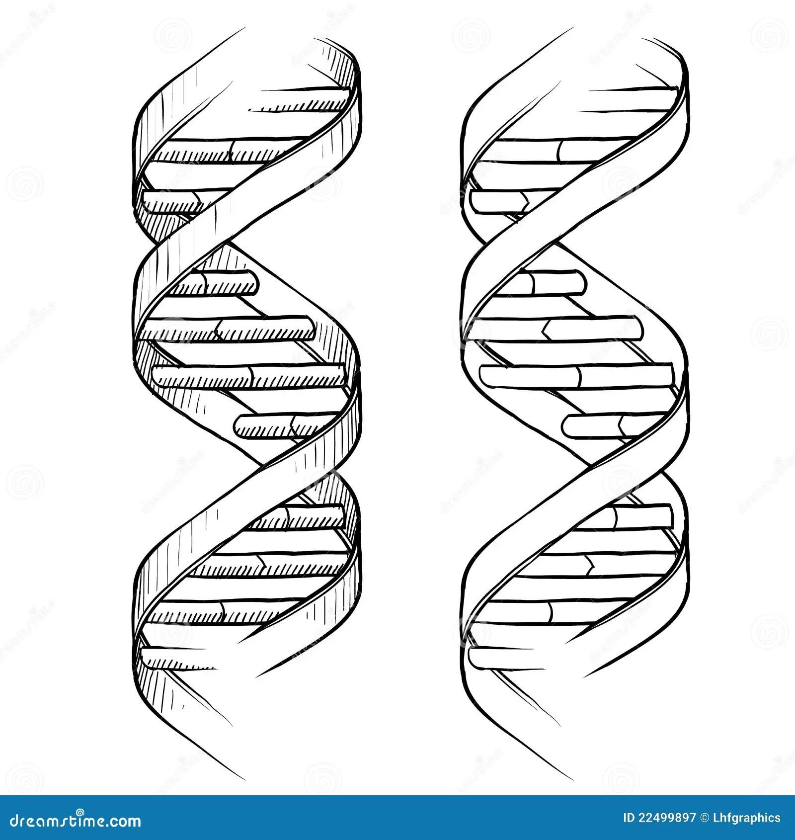 Illustrazione Della Doppia Elica Del DNA Illustrazione