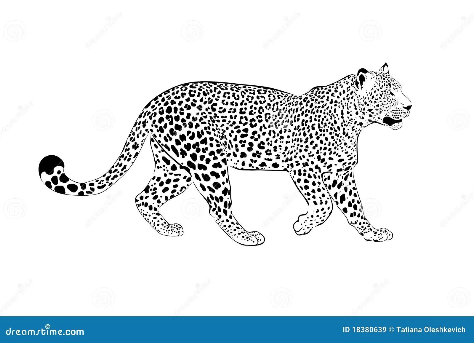 Ilustracao Do Leopardo Em Um Branco