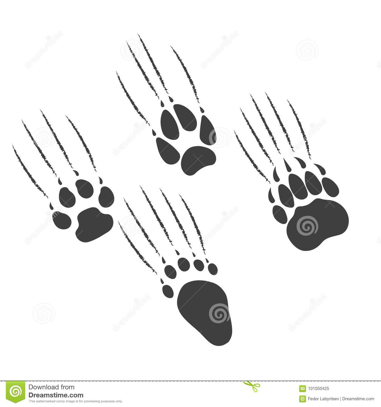 Bear Footprint With Claw Scratches Vector Vector