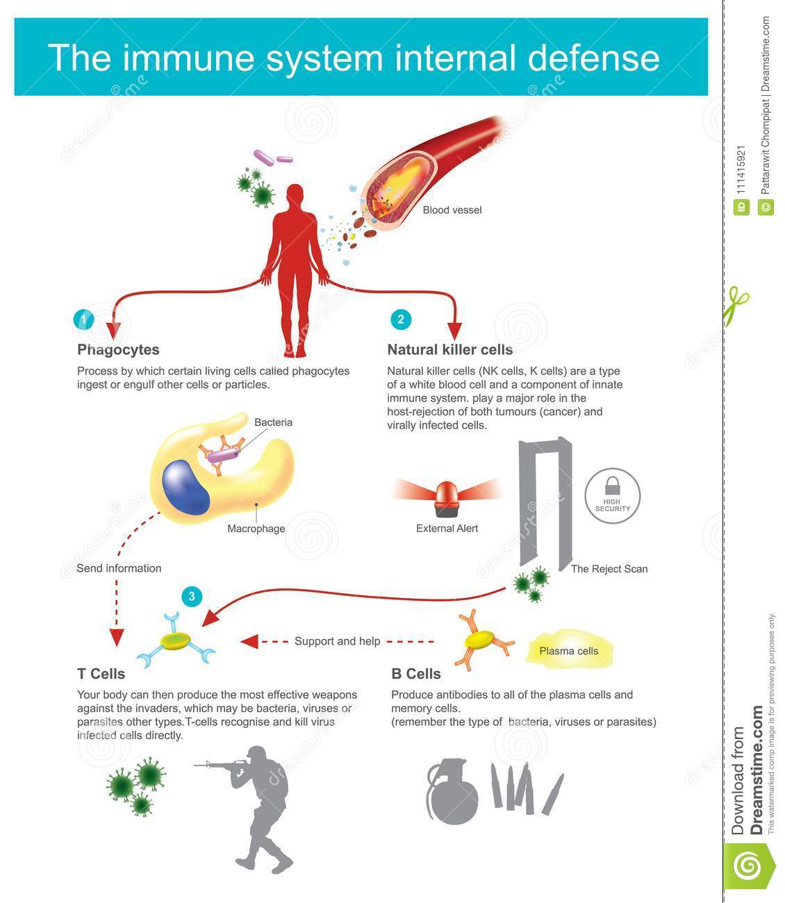The Immune System Internal Defence Stock Vector