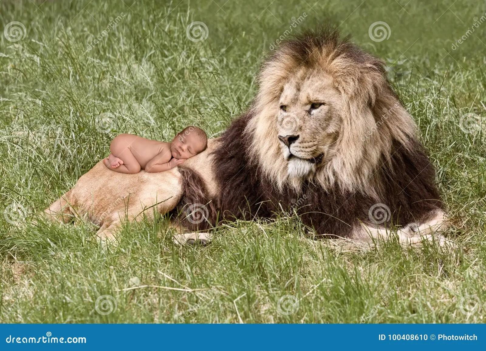 Baby Sleeping On Lion Stock Photo Image Of Child Newborn 100408610