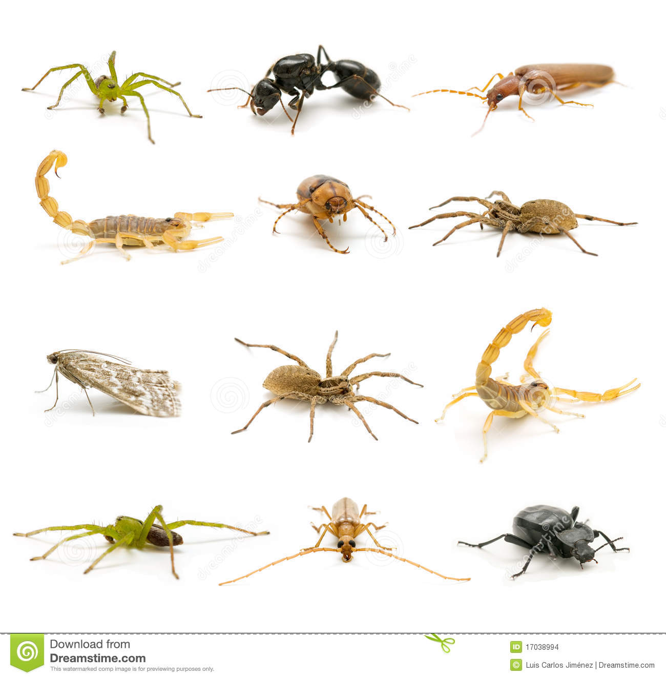 Insects And Arachnids Stock Photo Image Of Pest Moths