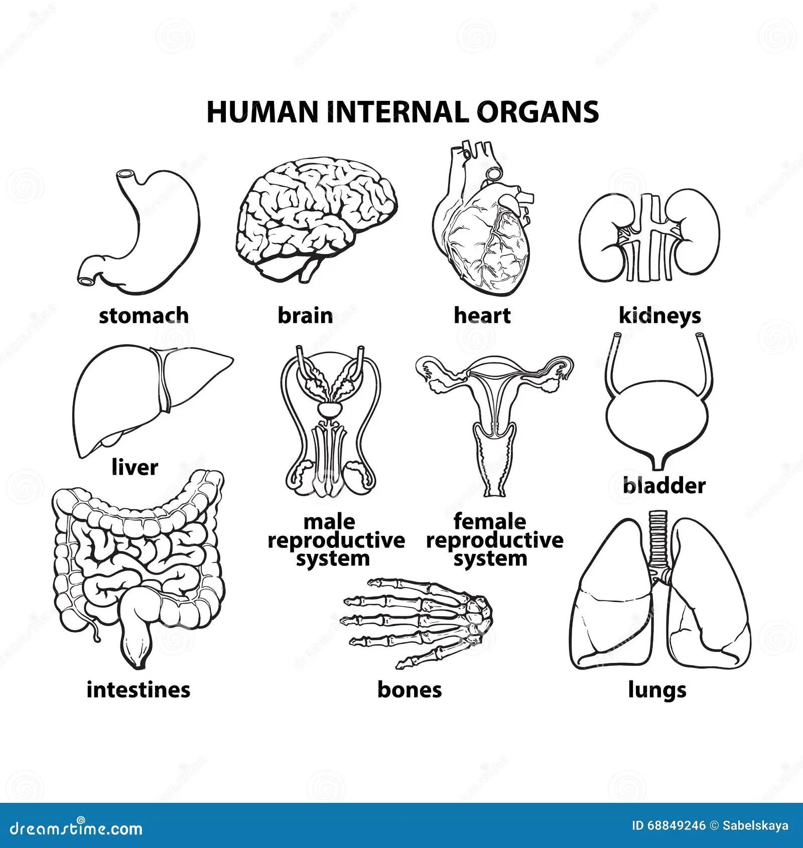 Body Diagram Of Kidneys