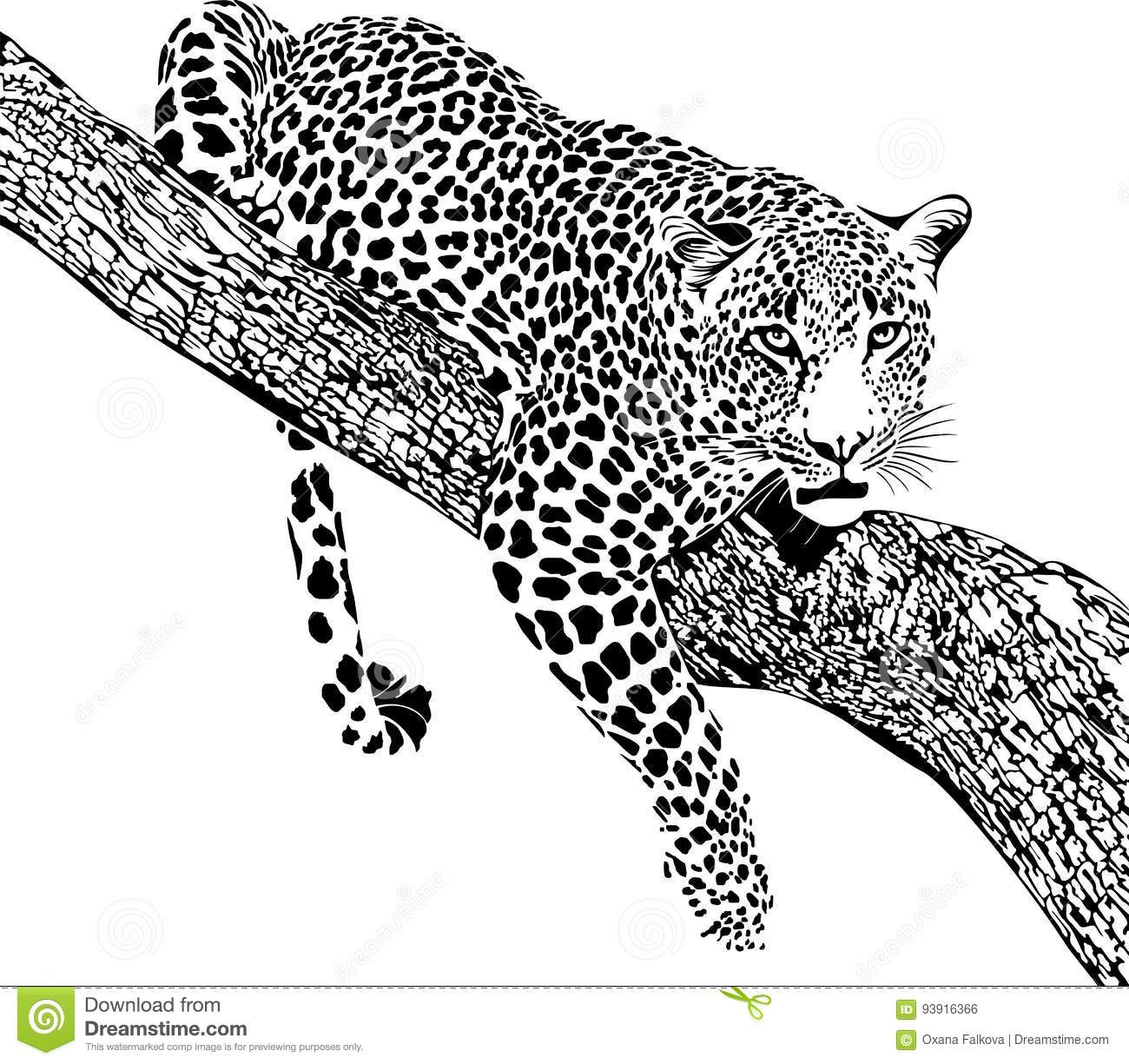 Jaguar Stock Vector Illustration Of Africa African