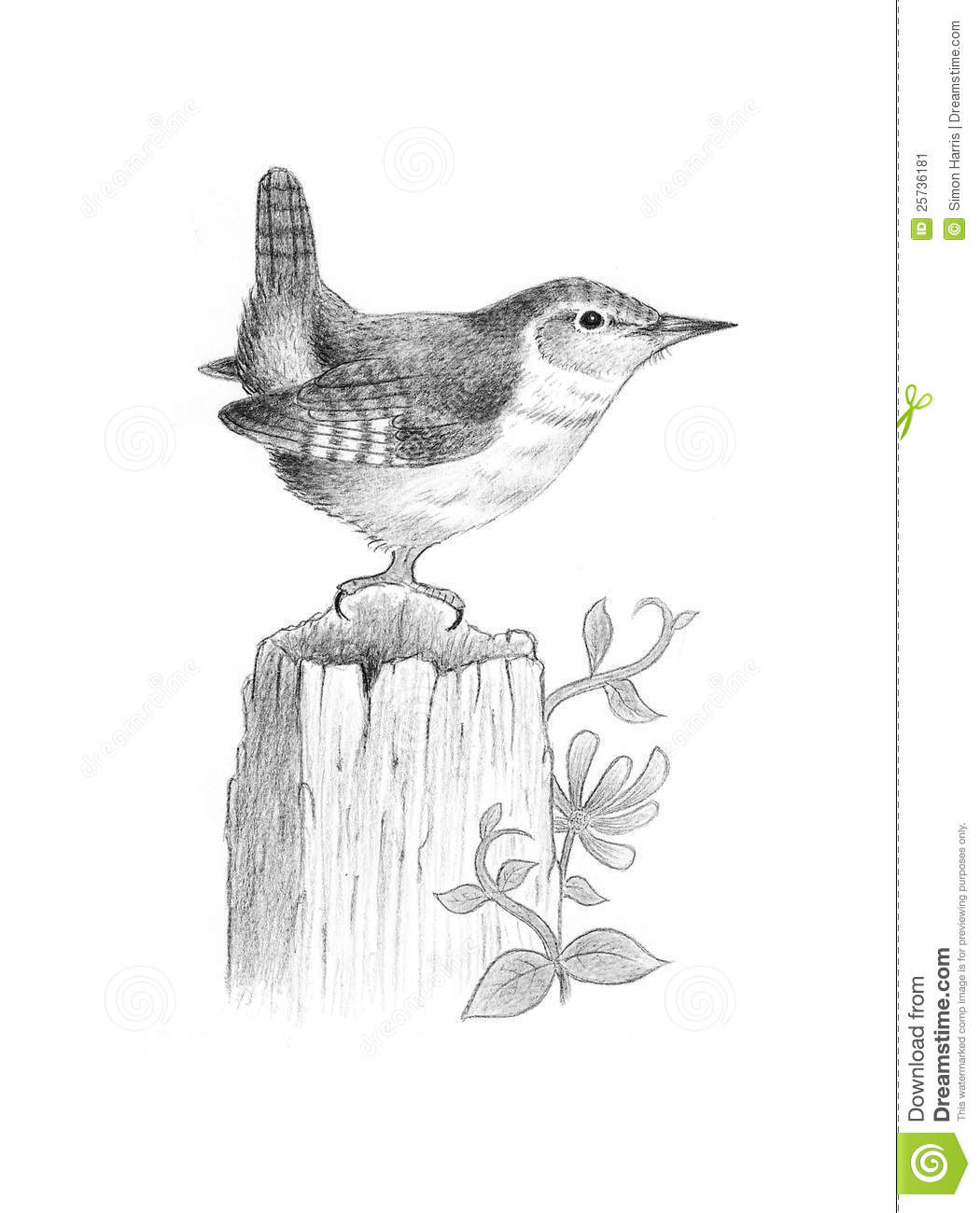 Jenny Wren Stock Illustration Image Of Beak Tree Bird