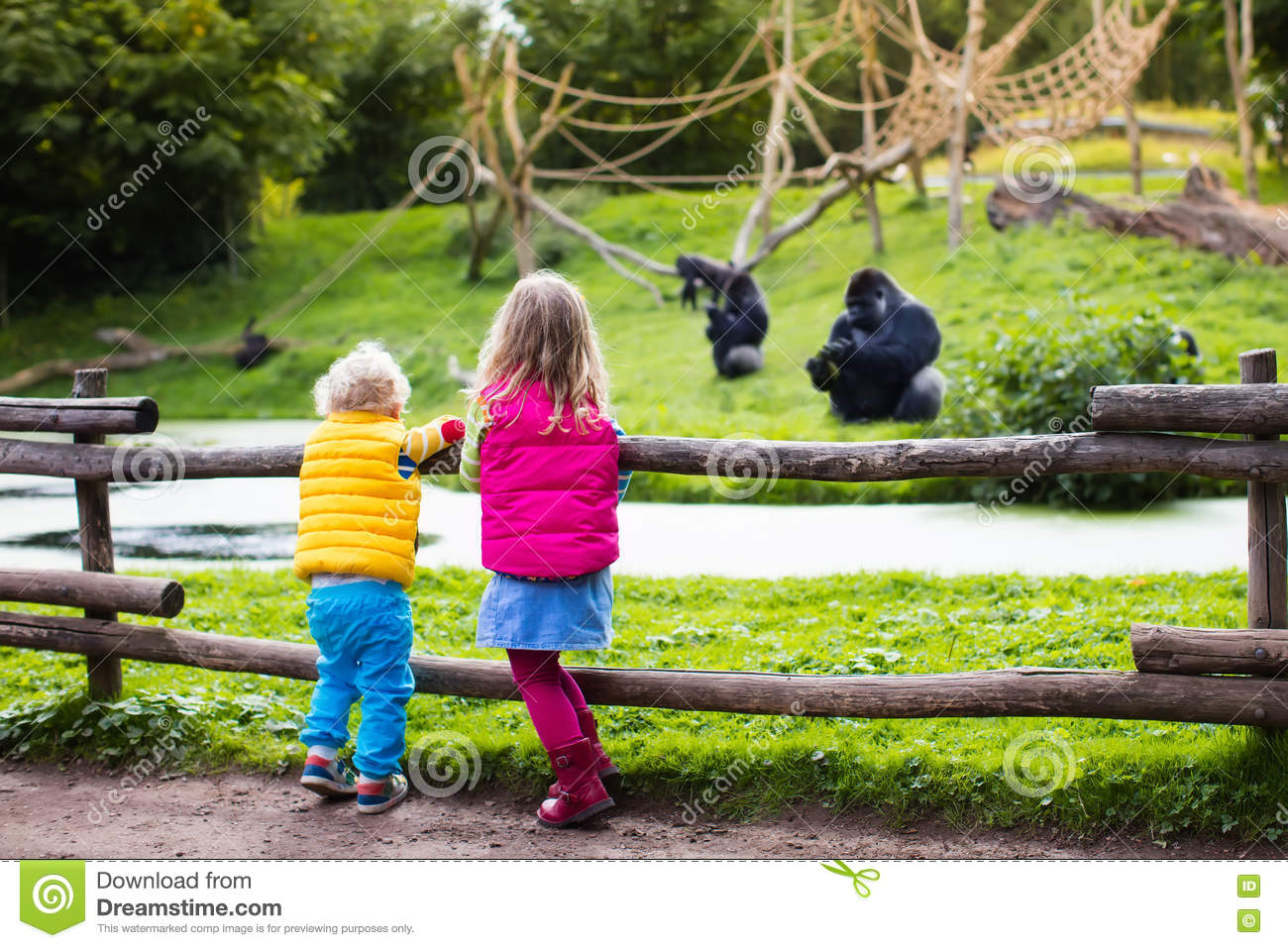 Kids Watching Animals At The Zoo Stock Image