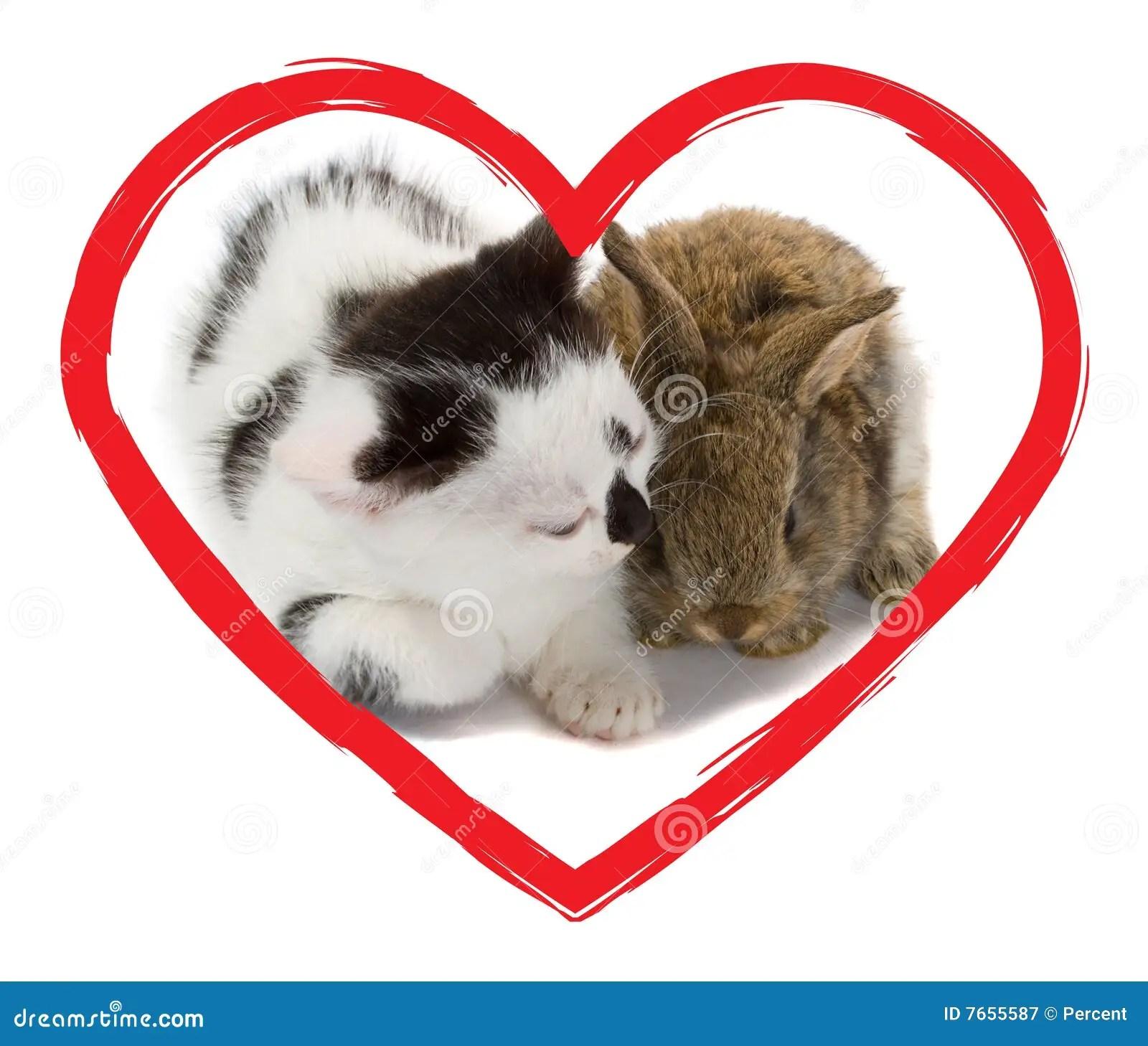 Kitten And Heart Stock Photo 33475278