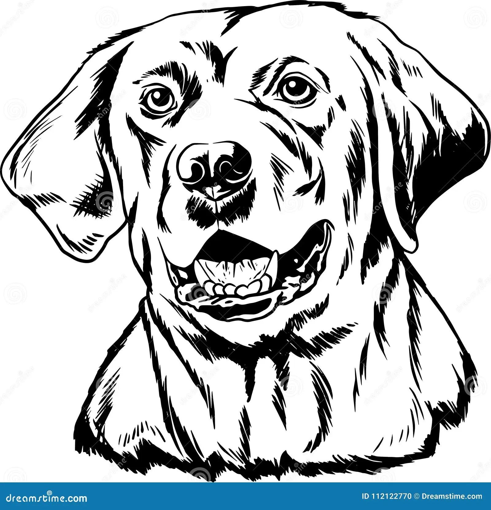 Labrador Retriever Black And White Outline Stock Vector