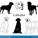 Labrador Set Collection Of Pedigree Dogs Black White Labrador Dog Illustration Vector Drawing Of A Pet Tattoo Stock Vector Illustration Of Background Character 157652217