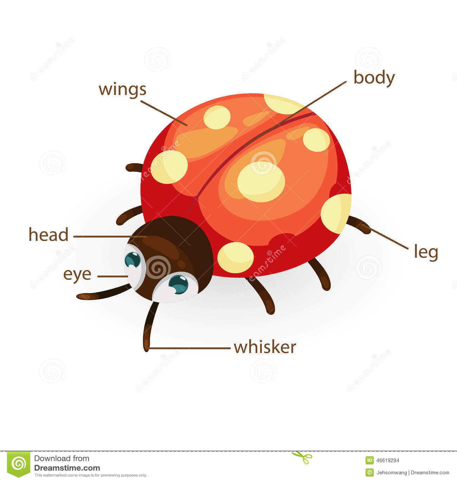 Ladybug Vocabulary Part Of Body Stock Vector