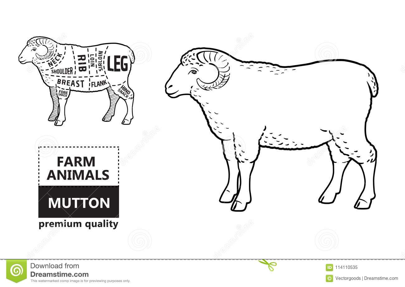 Bacon Butcher Diagram