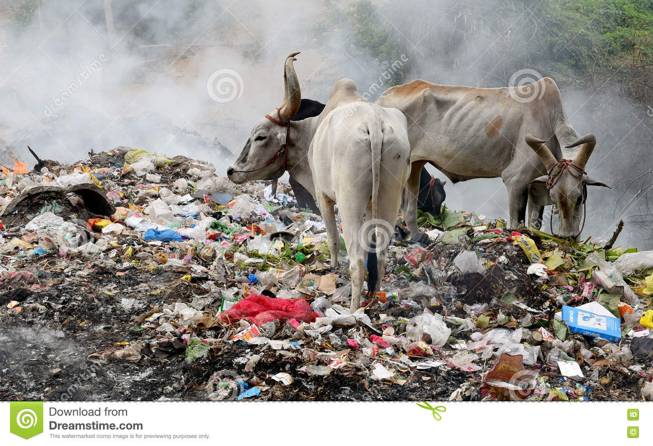 Land Pollution Editorial Image Image Of Ecological