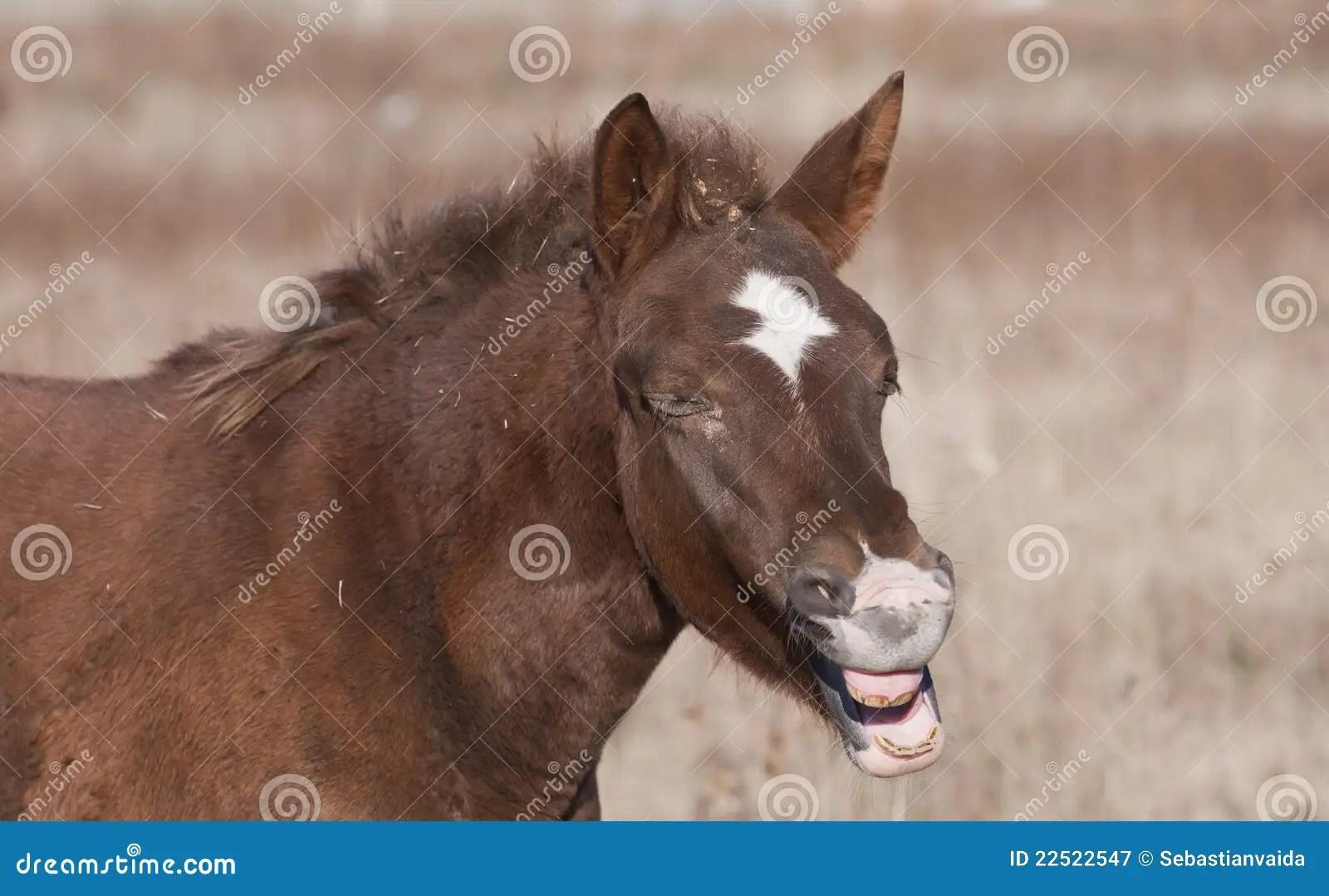 Laugh Out Loud Horse