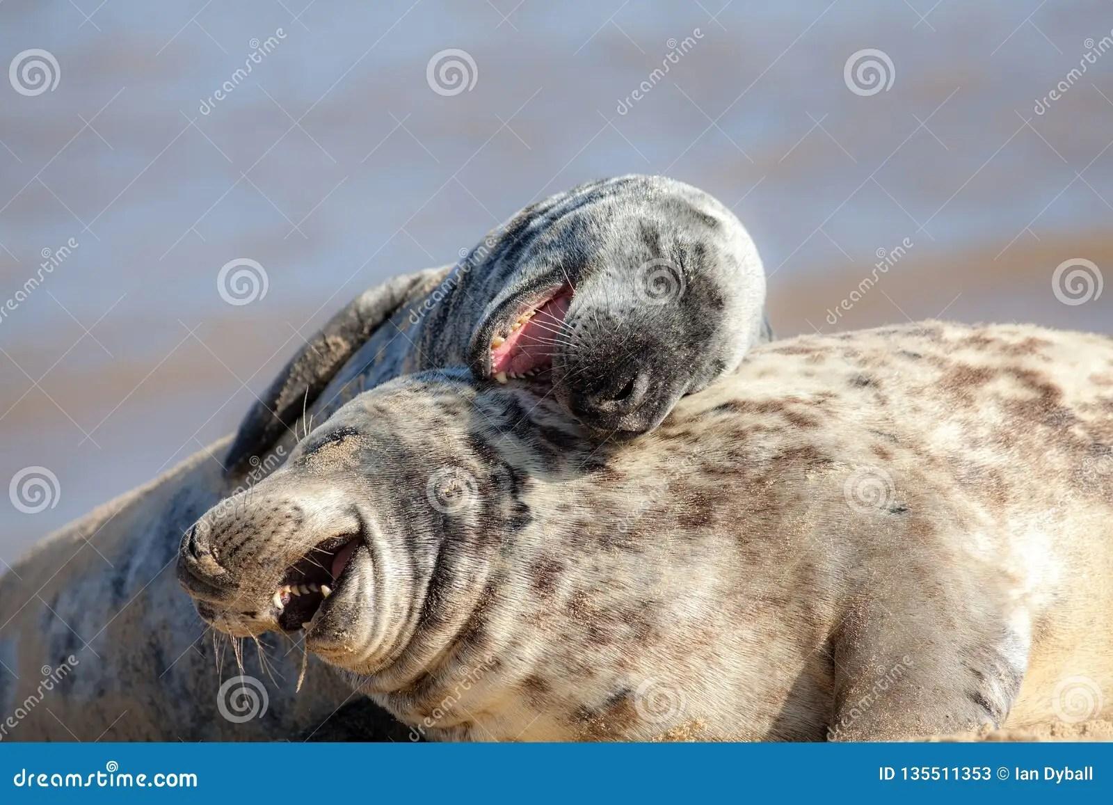 Laughing Out Loud Funny Animal Meme Image Animals Having Fun