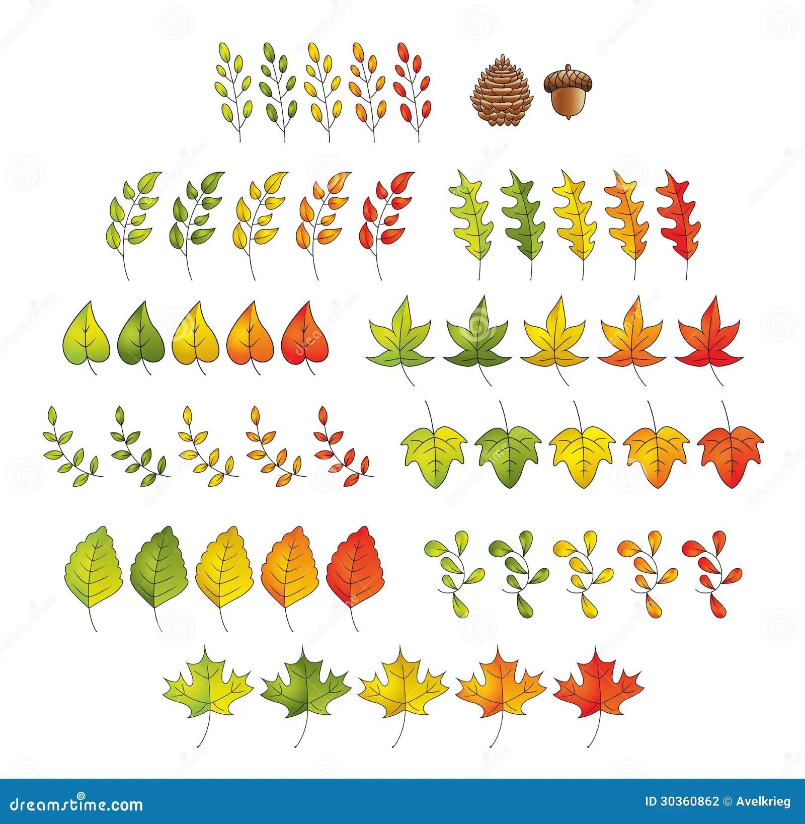 Leaf Set Stock Vector Illustration Of Eps8 Heart