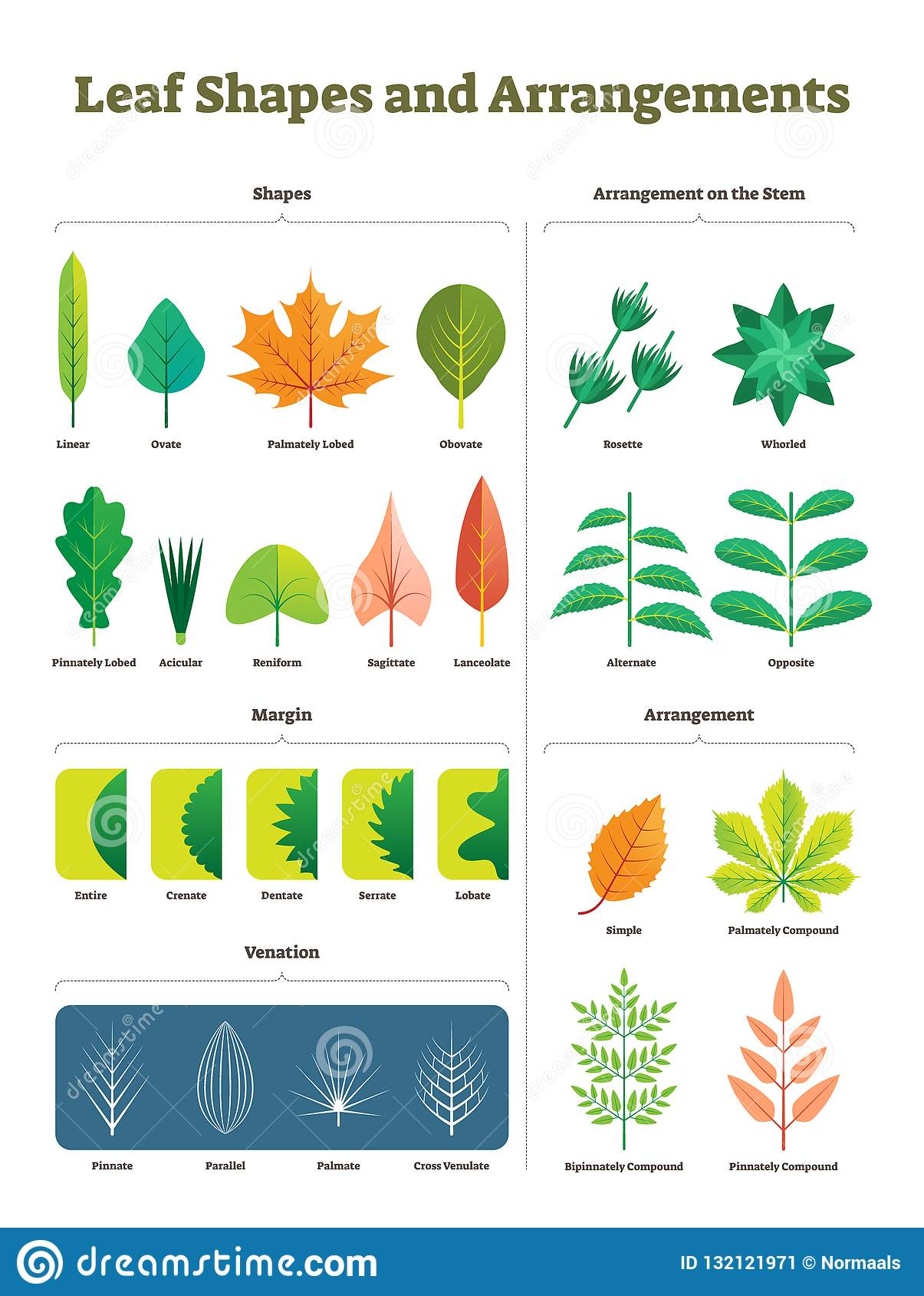 Leaf Shapes Complex Vector Illustration Biological