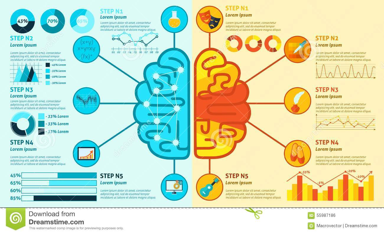 Left And Right Brain Infographics Stock Vector
