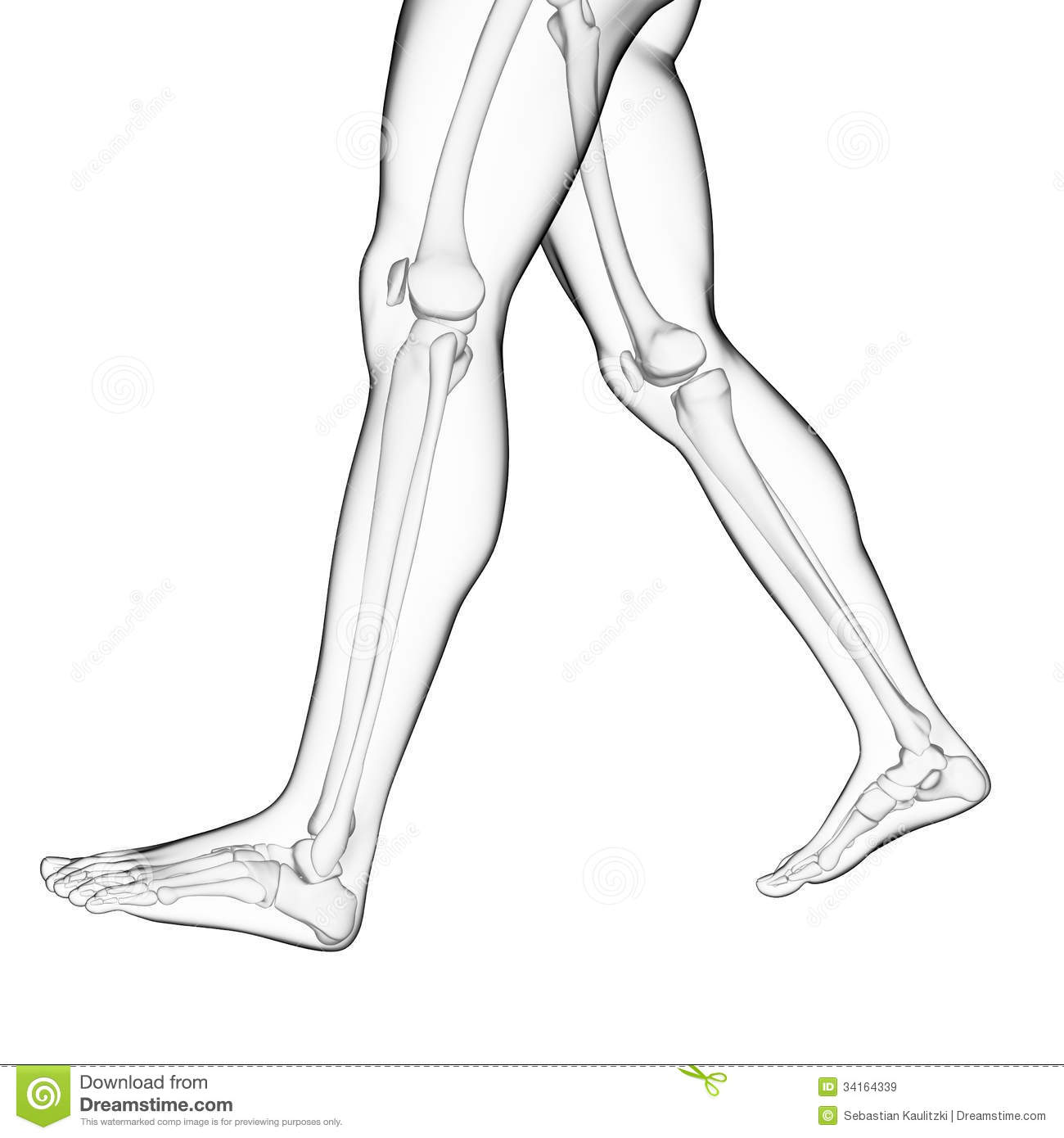 The Leg Bones Stock Illustration Illustration Of Skeleton