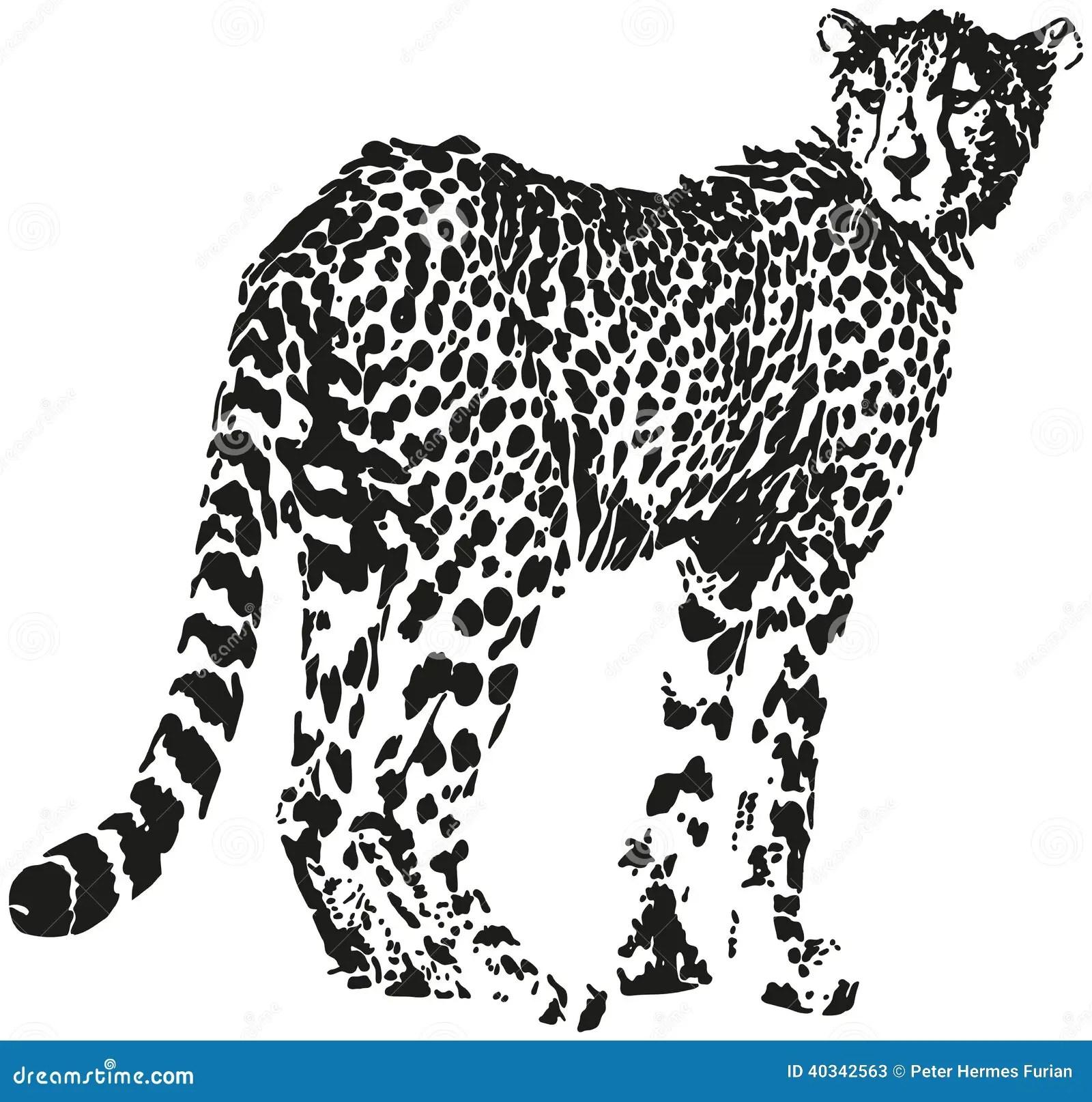 Leopard Stock Vector Illustration Of Panthera Pattern