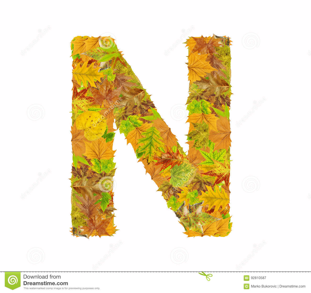 The Letter N Of Alphabet Made Of Autumn Leaves Stock Image
