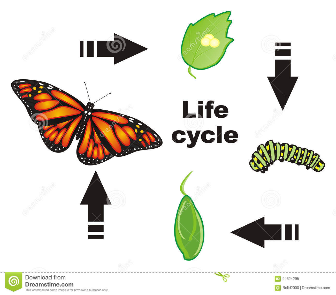 Life Cycle Of A Honey Bee Worksheet