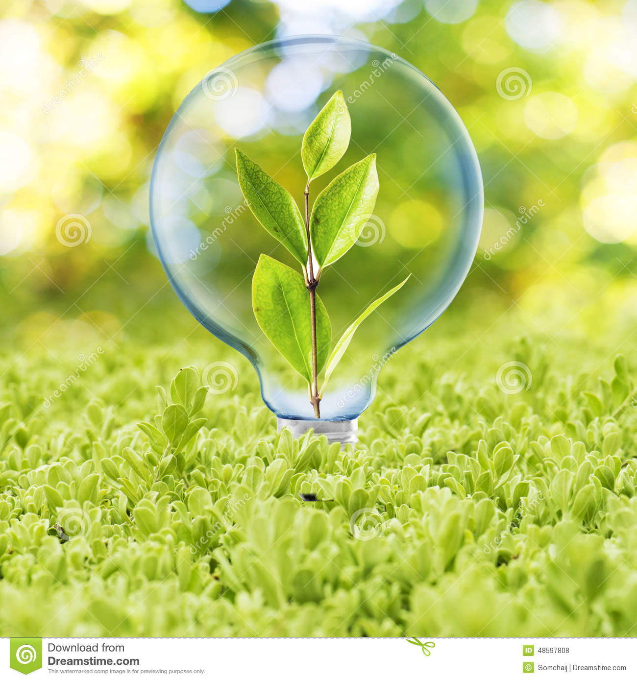 Light Bulb With Plant Inside Stock Photo