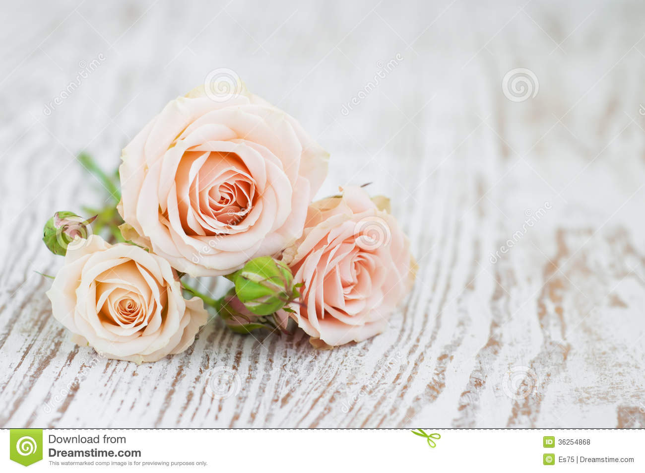 Light Pink Roses Stock Photo Image Of Birthday Table