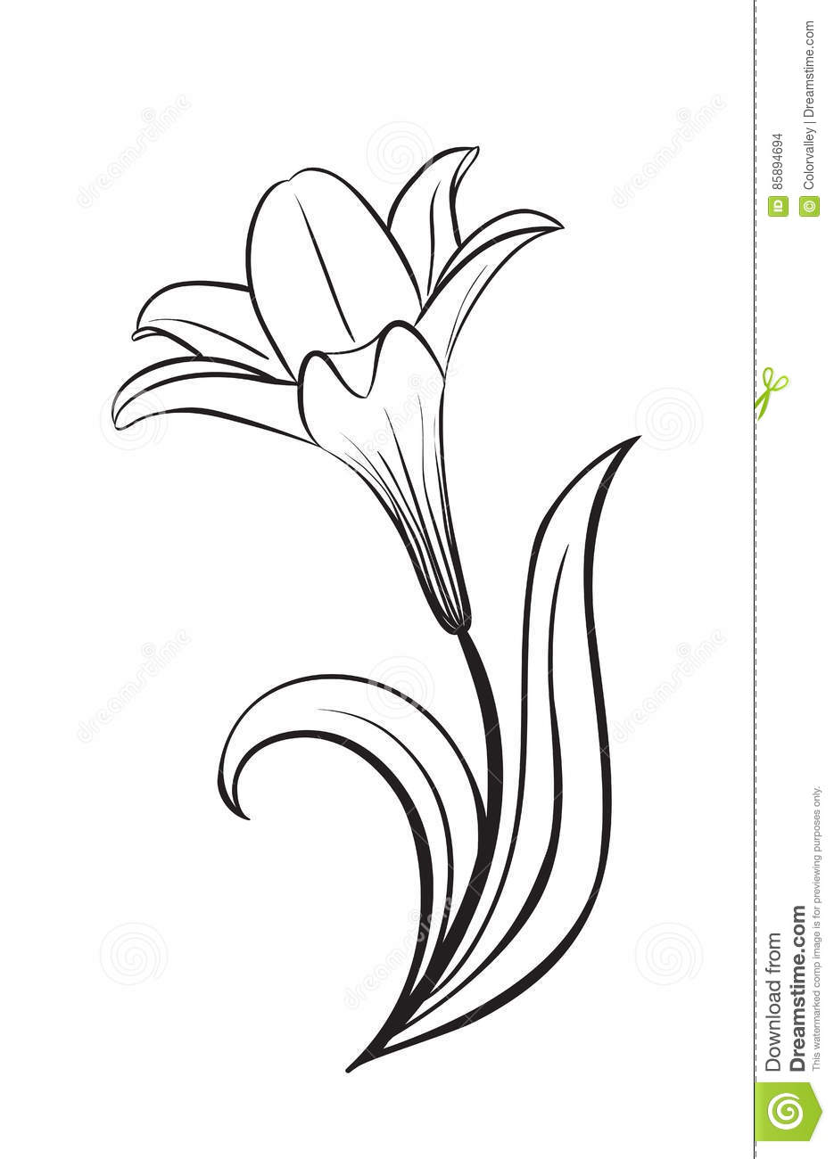 Lily Flower Vector Icon Stock Vector Illustration Of