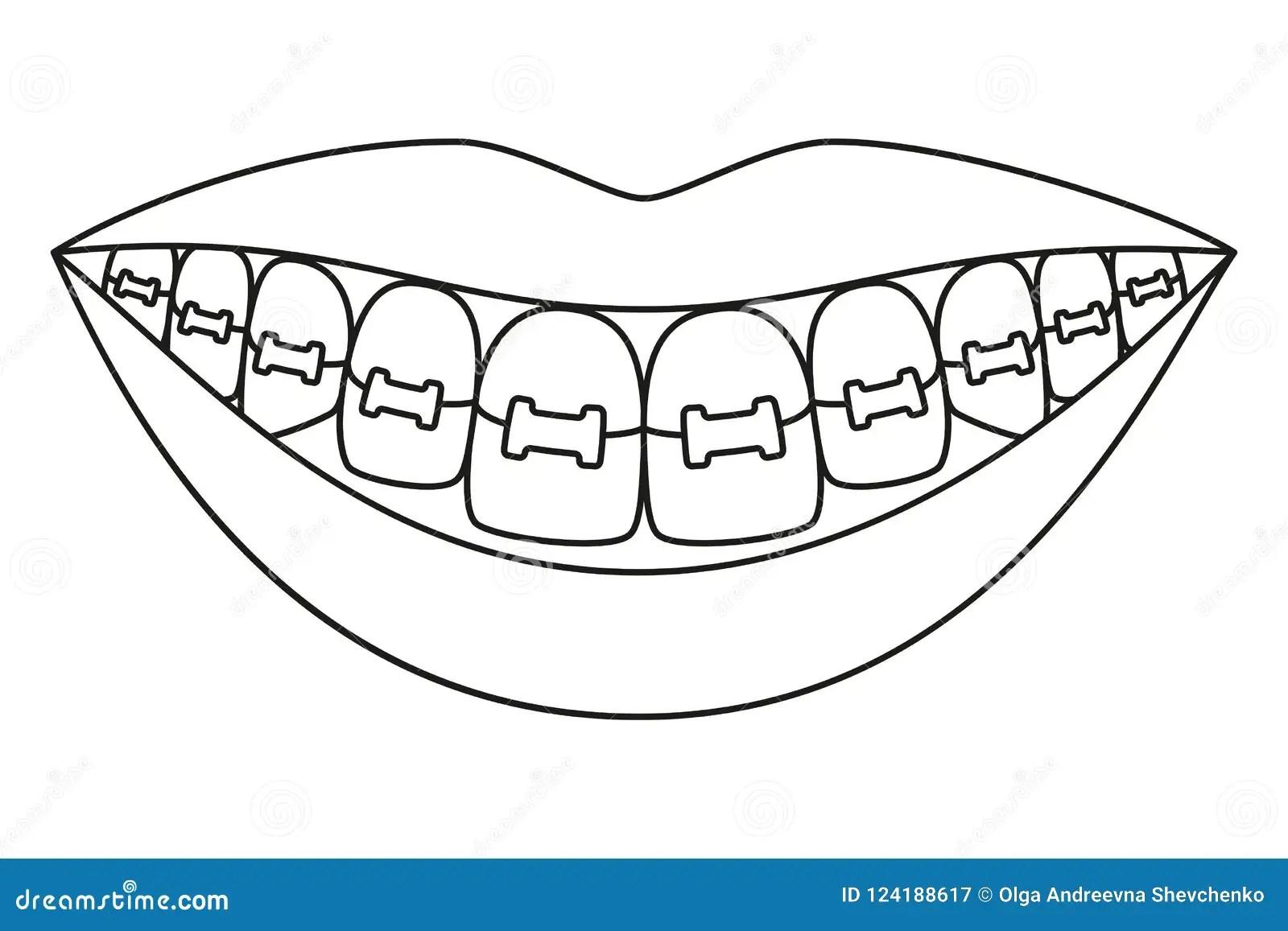 Dentition Cartoon Vector