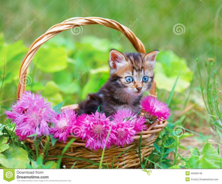 Little Kitten In A Basket With Flowers Stock Photo   Image of field     Little kitten in a basket with flowers