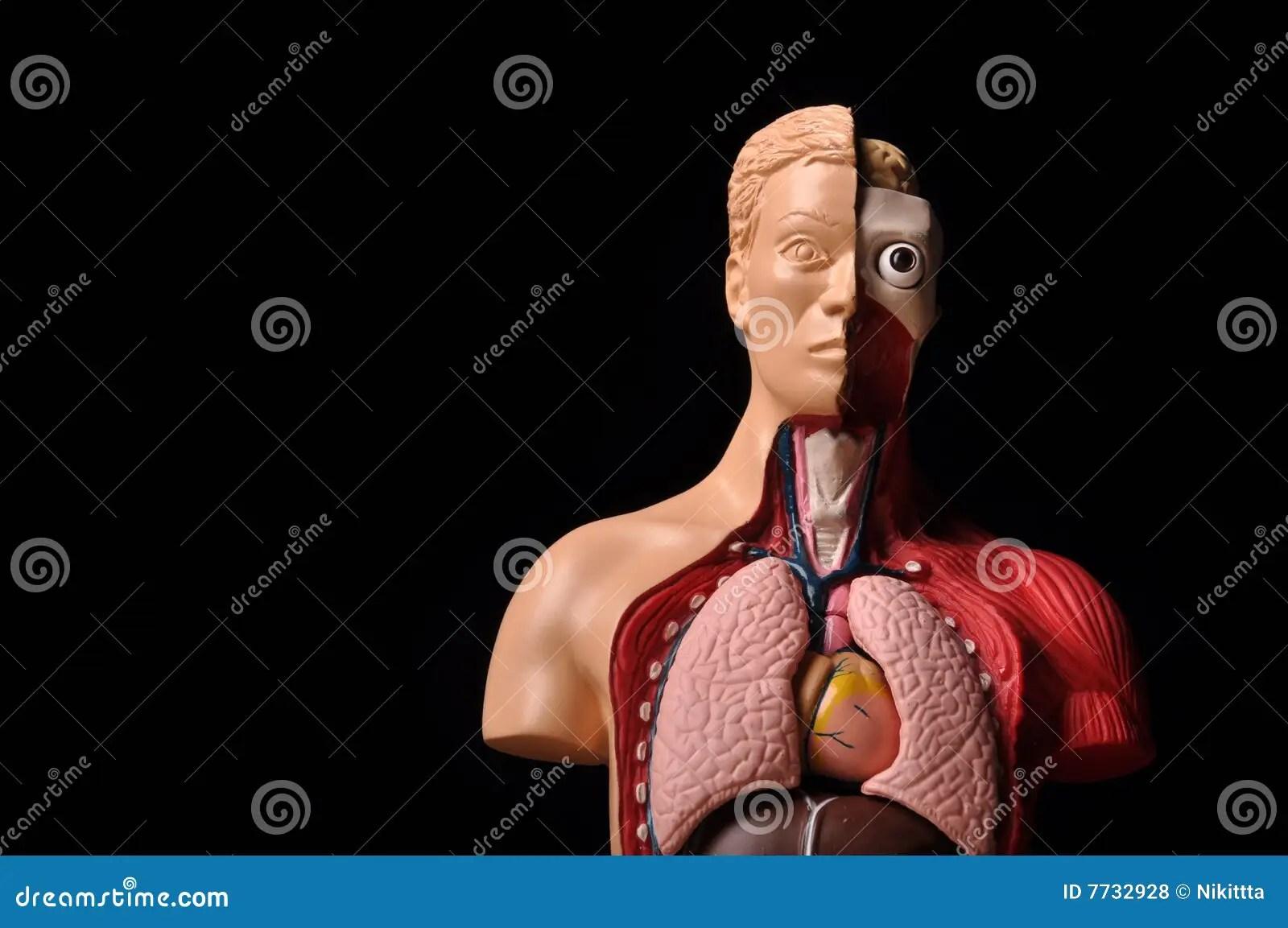 Look Inside Body Human Anatomy Royalty Free Stock Photos